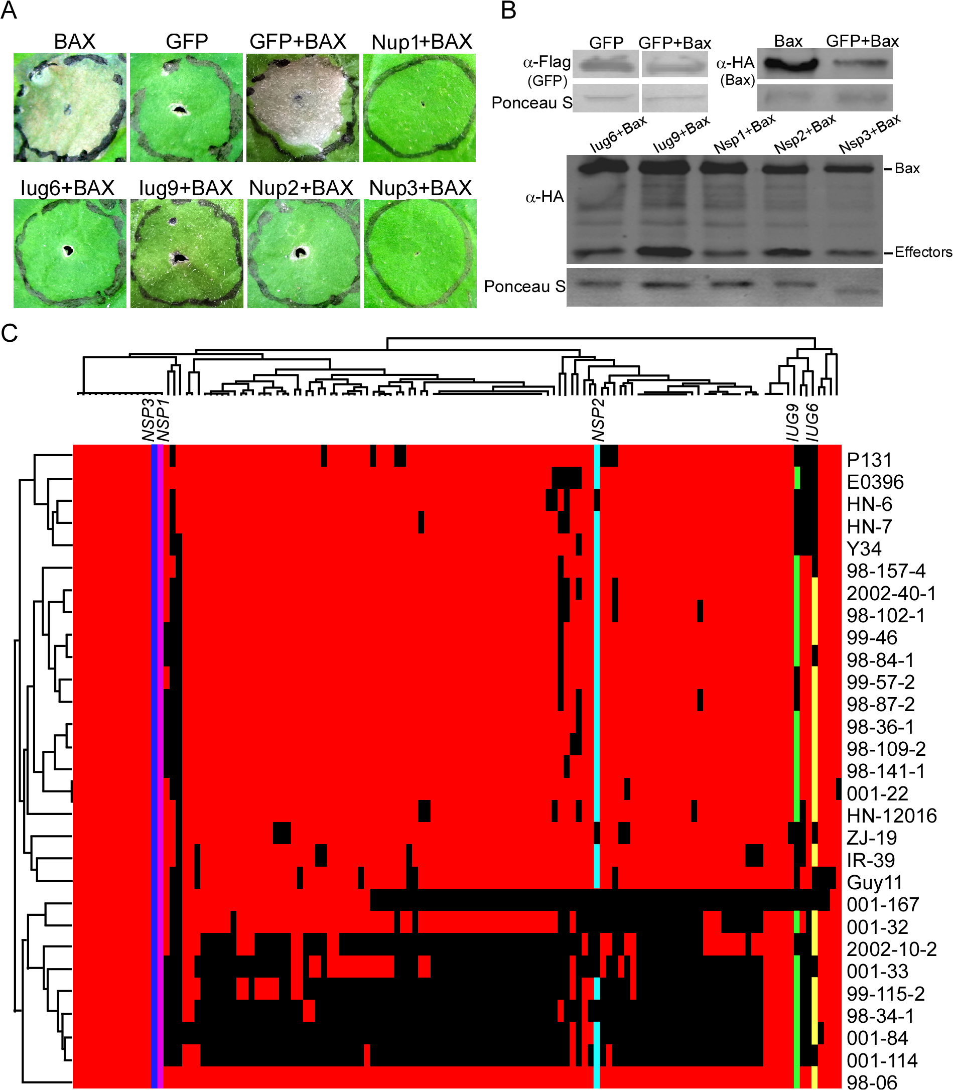Iug6, Iug9, Nup1, Nup2, and Nup3 suppress the cell death triggered by BAX.