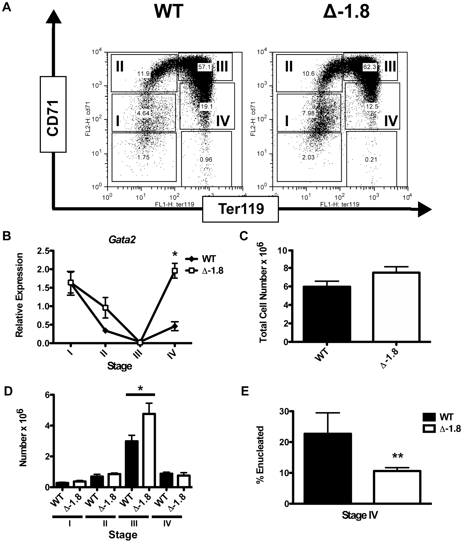Alterations in <i>Gata2</i> expression in late erythroid development in Δ-1.8 mice.