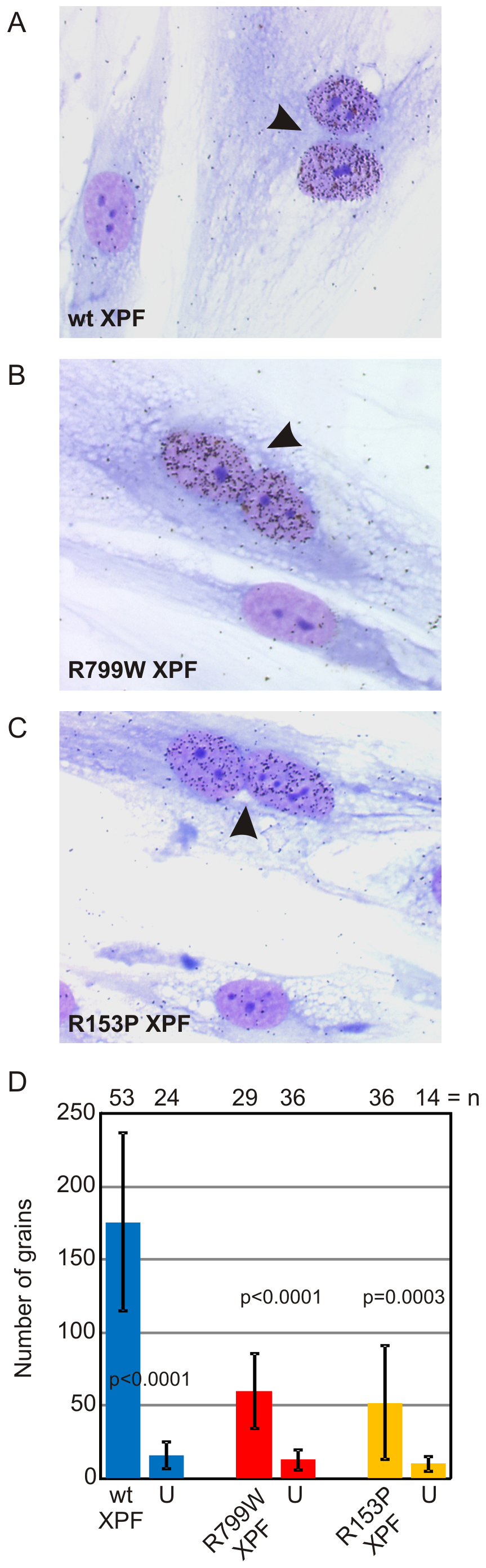 Correction of <i>XPF</i> mutant cell NER defect by microinjection of XPF-ERCC1.
