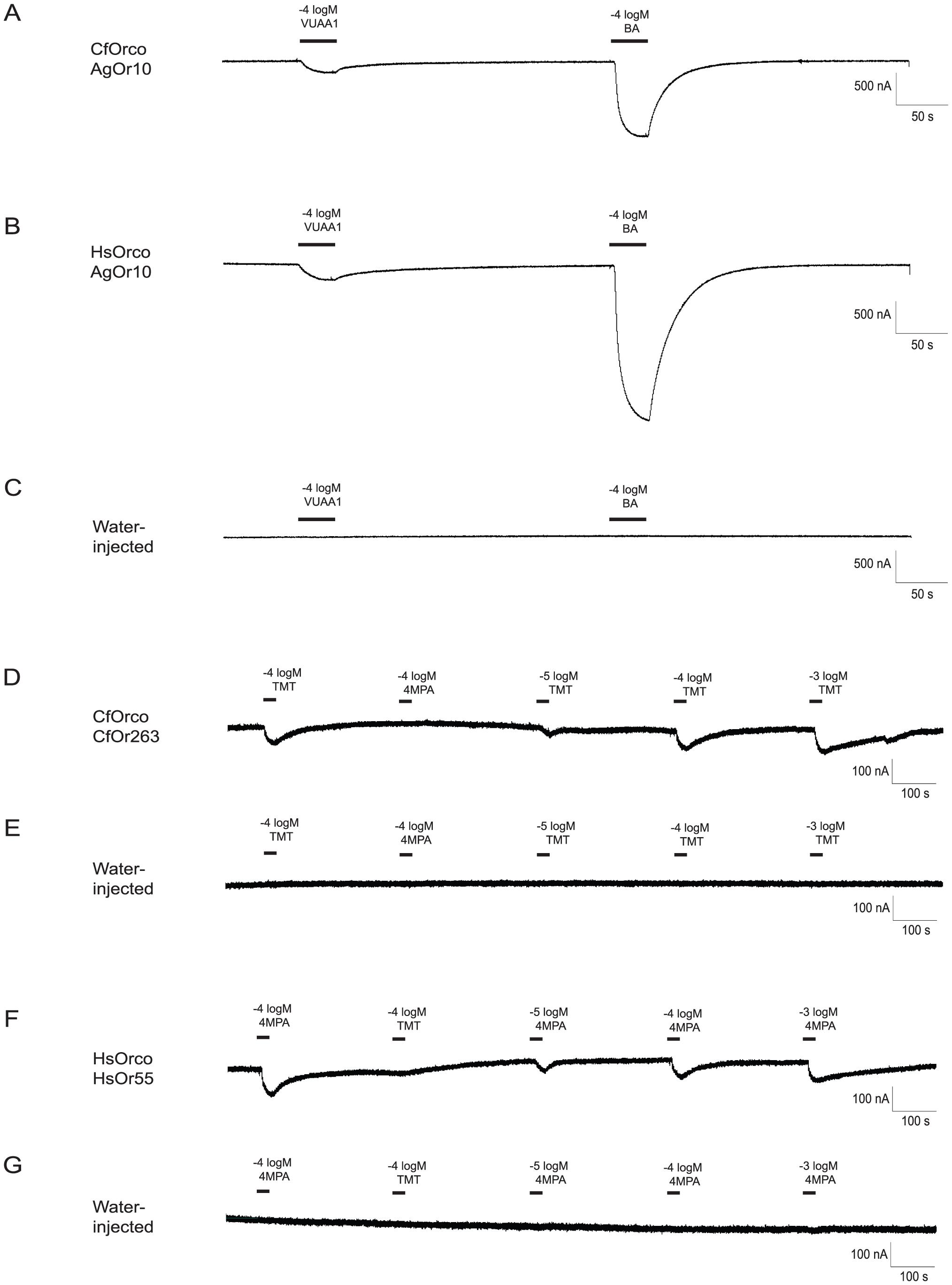 Identification of ligands for <i>C. floridanus</i> and <i>H. saltator</i> Ors.