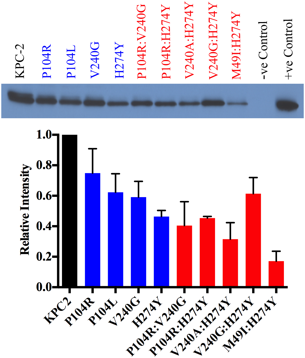 Protein expression levels of KPC-2 β-lactamase and variant enzymes.
