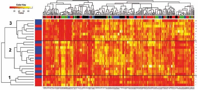 Heatmapa zobrazující výsledek shlukování DIANA na všech površích. Řádky představují jednotlivé pacienty, sloupce jednotlivé m/ z. Barevně jsou dále odlišeni pacienti (modrá – chemosenzitivní pacient, červená – chemorezistentní pacient) i povrchy (H50 – černá, IMAC – modrá, NP20 kys – zelená, NP20zas – červená). Jednotlivé buňky zobrazují intenzitu výskytu jednotlivých fragmentů na příslušných m/ z, a to na barevné škále v rozmezí od nejnižší hodnoty (0 – červená), po nejvyšší (100 – bílá; viz Color Key). Černé horizontální přímky vymezují tři skupiny pacientů.