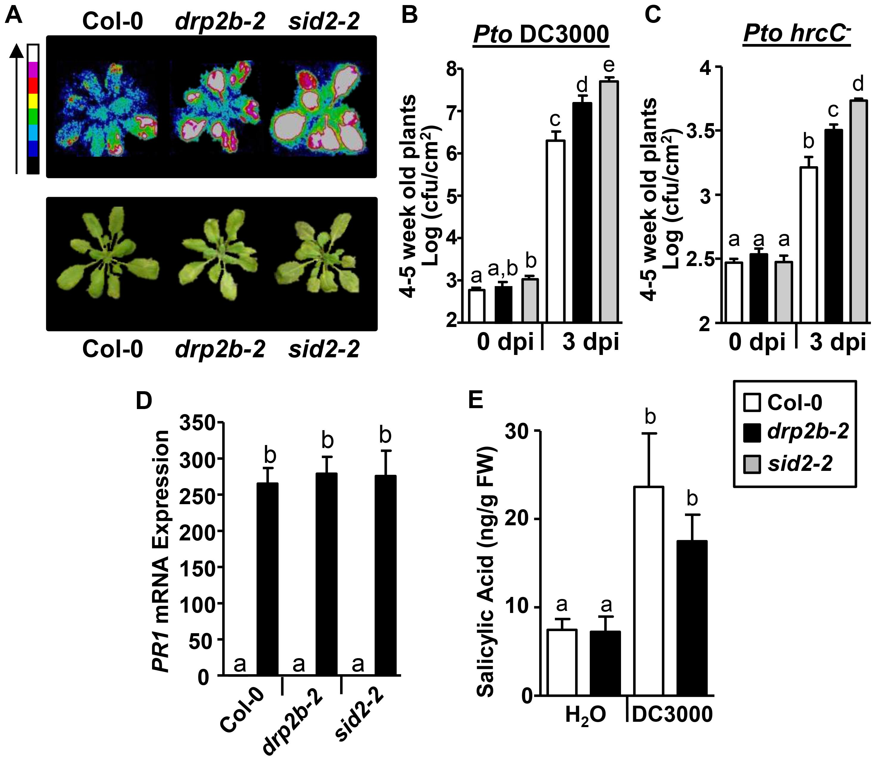 <i>drp2b</i> single mutants are more susceptible to <i>Pseudomonas syringae</i> pv. <i>tomato</i> (<i>Pto</i>) DC3000 and <i>Pto hrcC<sup>−</sup></i> infection.