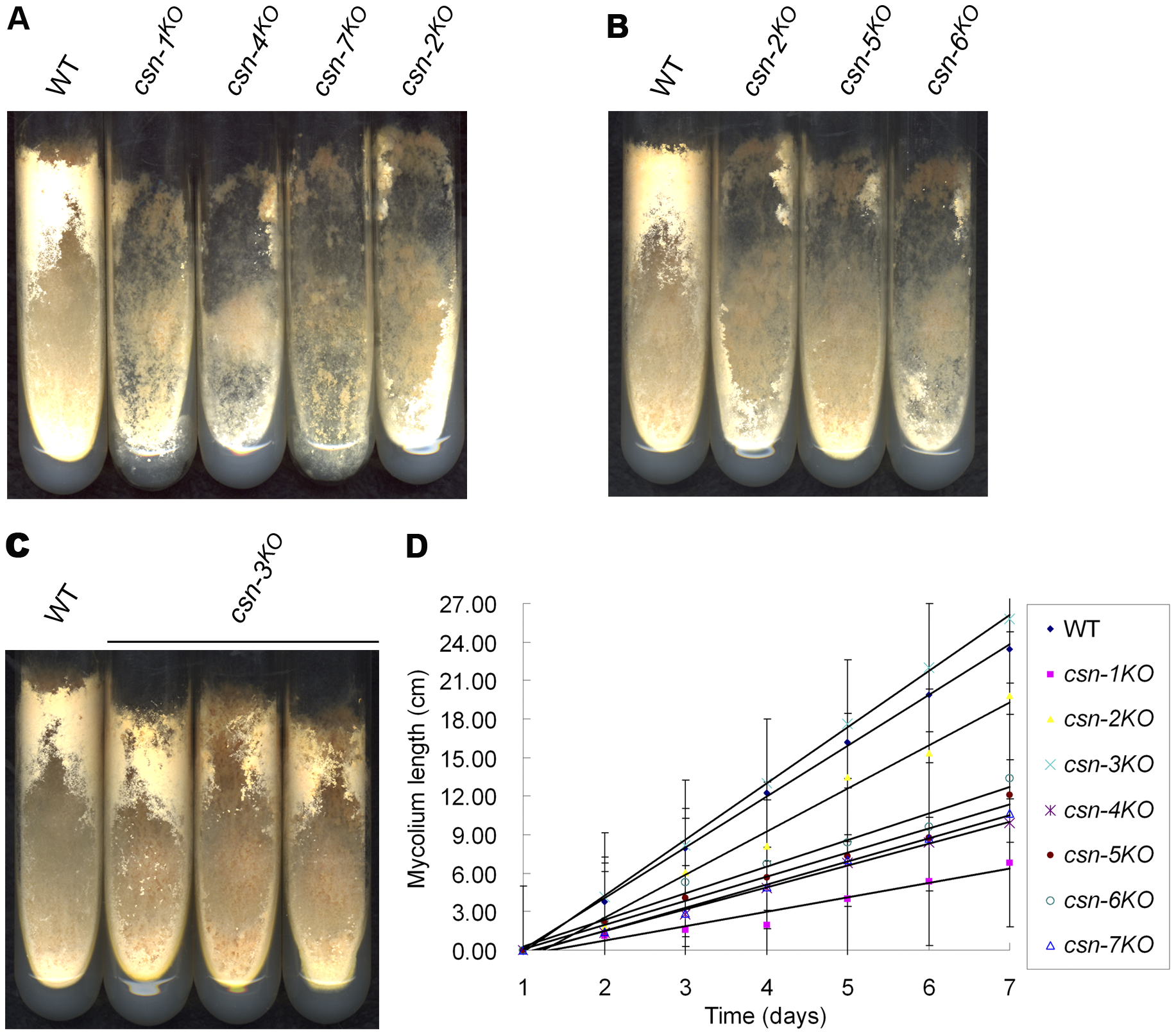 Effect of disrupting individual <i>csn</i> subunits on growth and developmental phenotypes.