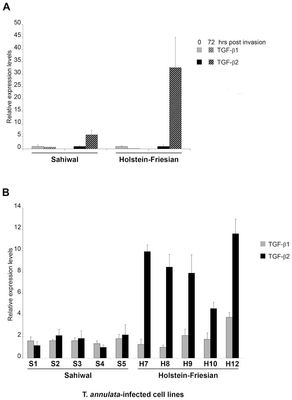 Induction of <i>TGF-b2</i> by <i>T. annulata</i> is greater in infected macrophages isolated from disease-susceptible compared to disease-resistant bovine hosts.