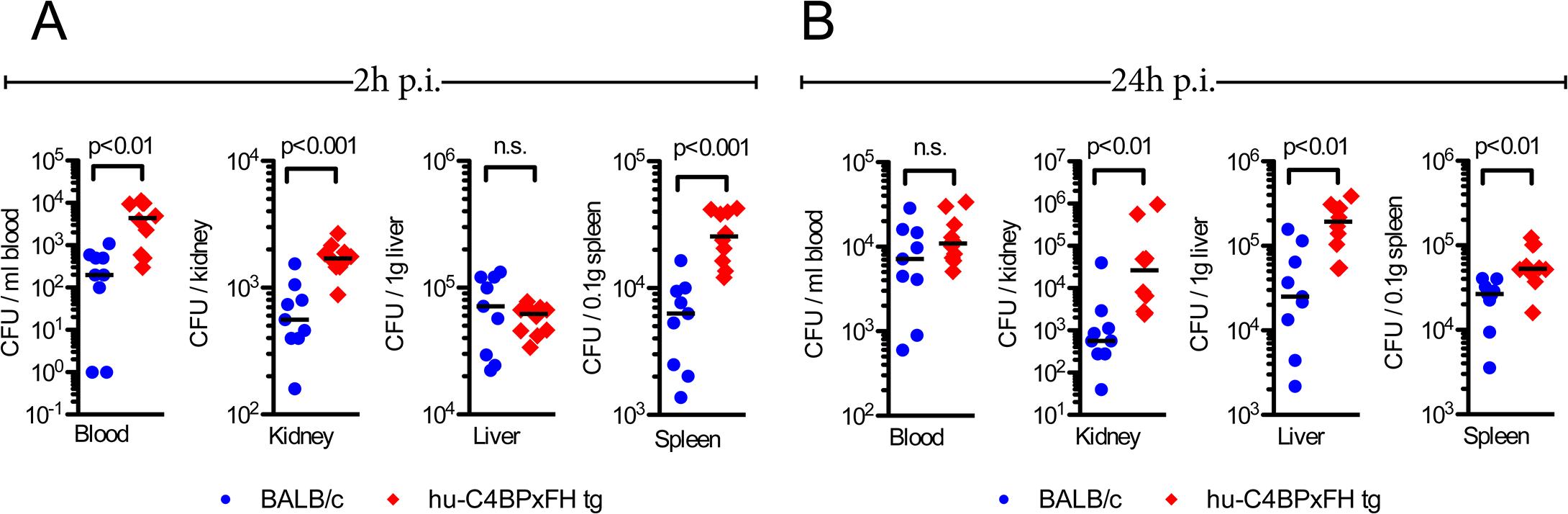 Hu-C4BPxFH tg mice show increased bacterial dissemination in organs.