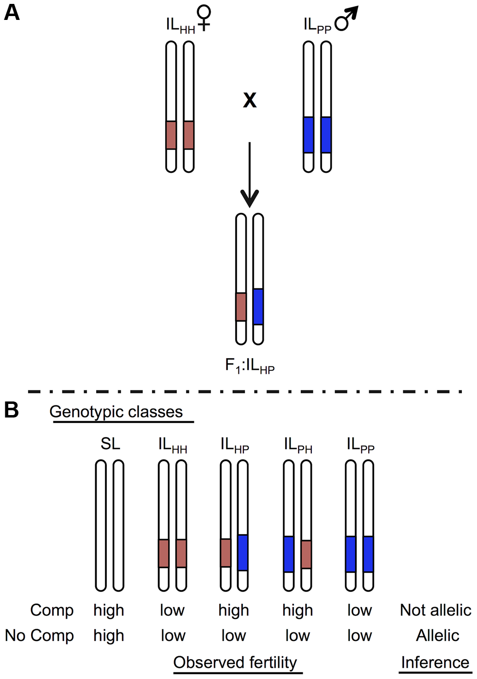 Schematic of a cross species test of allelism to determine homology at co-localized hybrid sterility loci.