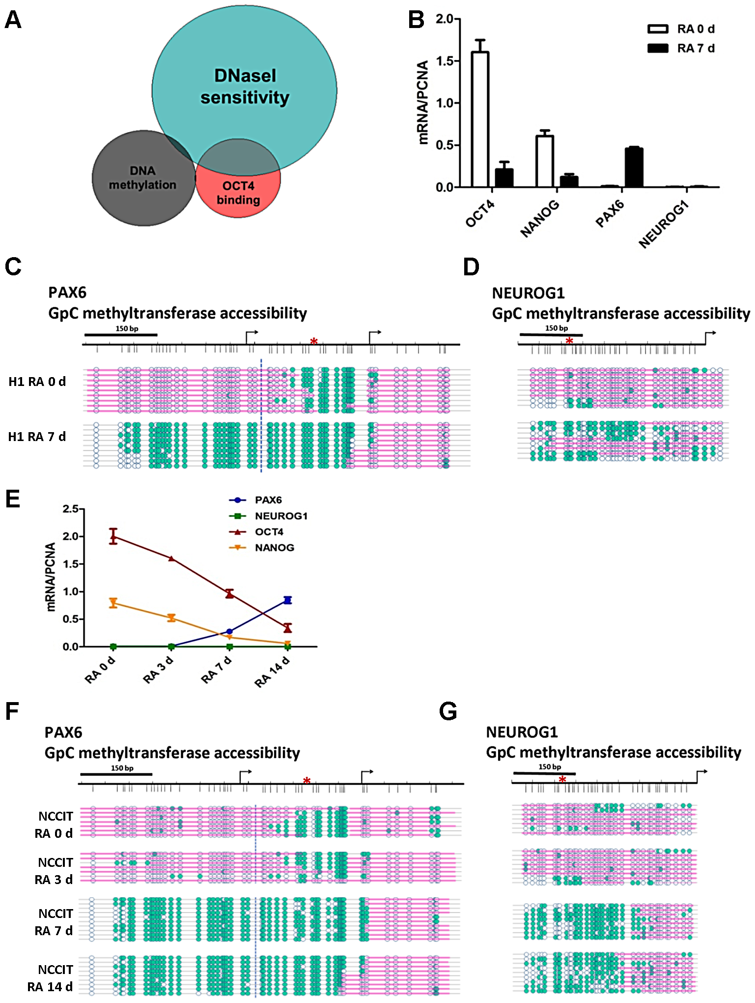 OCT4 target genes show distinctive nucleosome occupancy patterns that underlie the potential for gene expression.