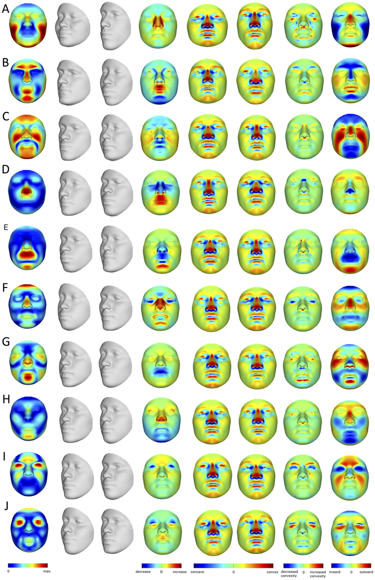 PCA effects on facial morphology.