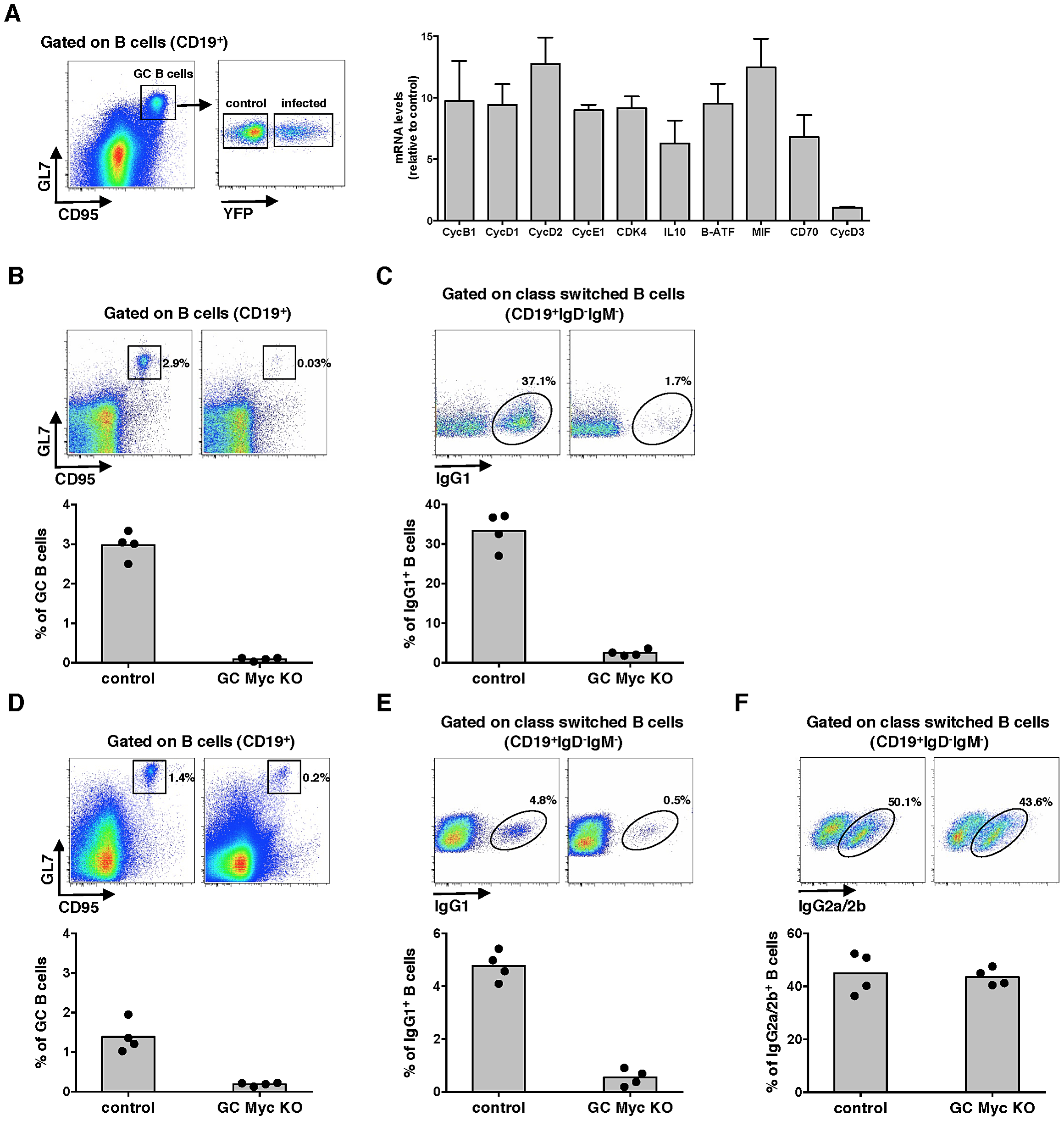 Myc transcriptional activity is upregulated during MuHV-4 latency in GC cells.