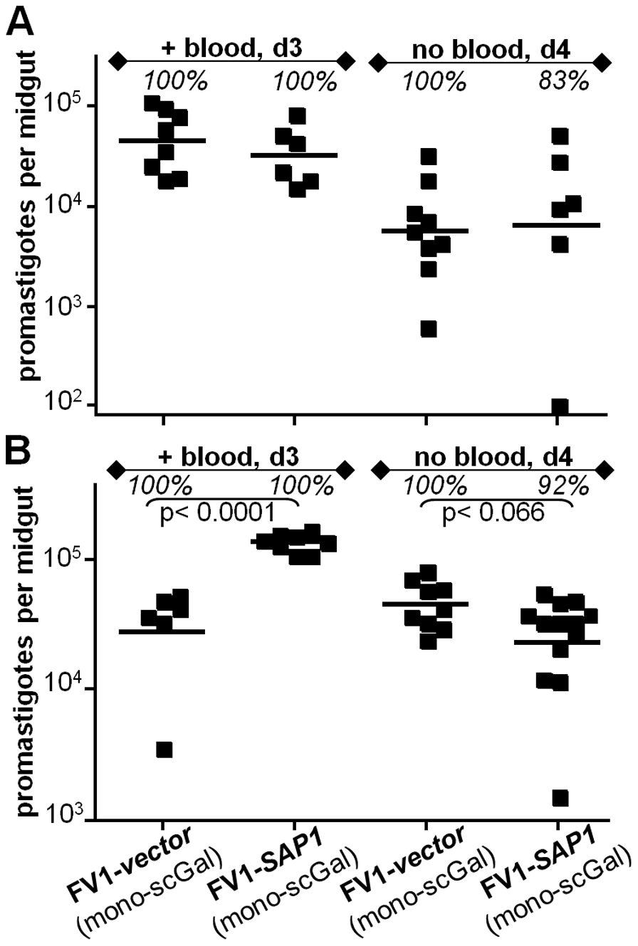 <i>L. major</i> FV1 promastigote survival in <i>Ppap</i>J infections is unaffected by over-expression of secreted acid phosphatase (SAP).