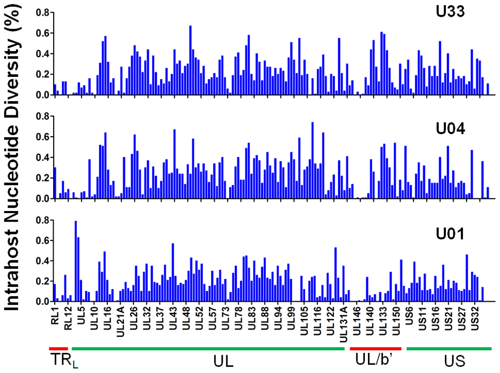 Intrahost nucleotide diversity was detected in most ORFs of the HCMV genome.