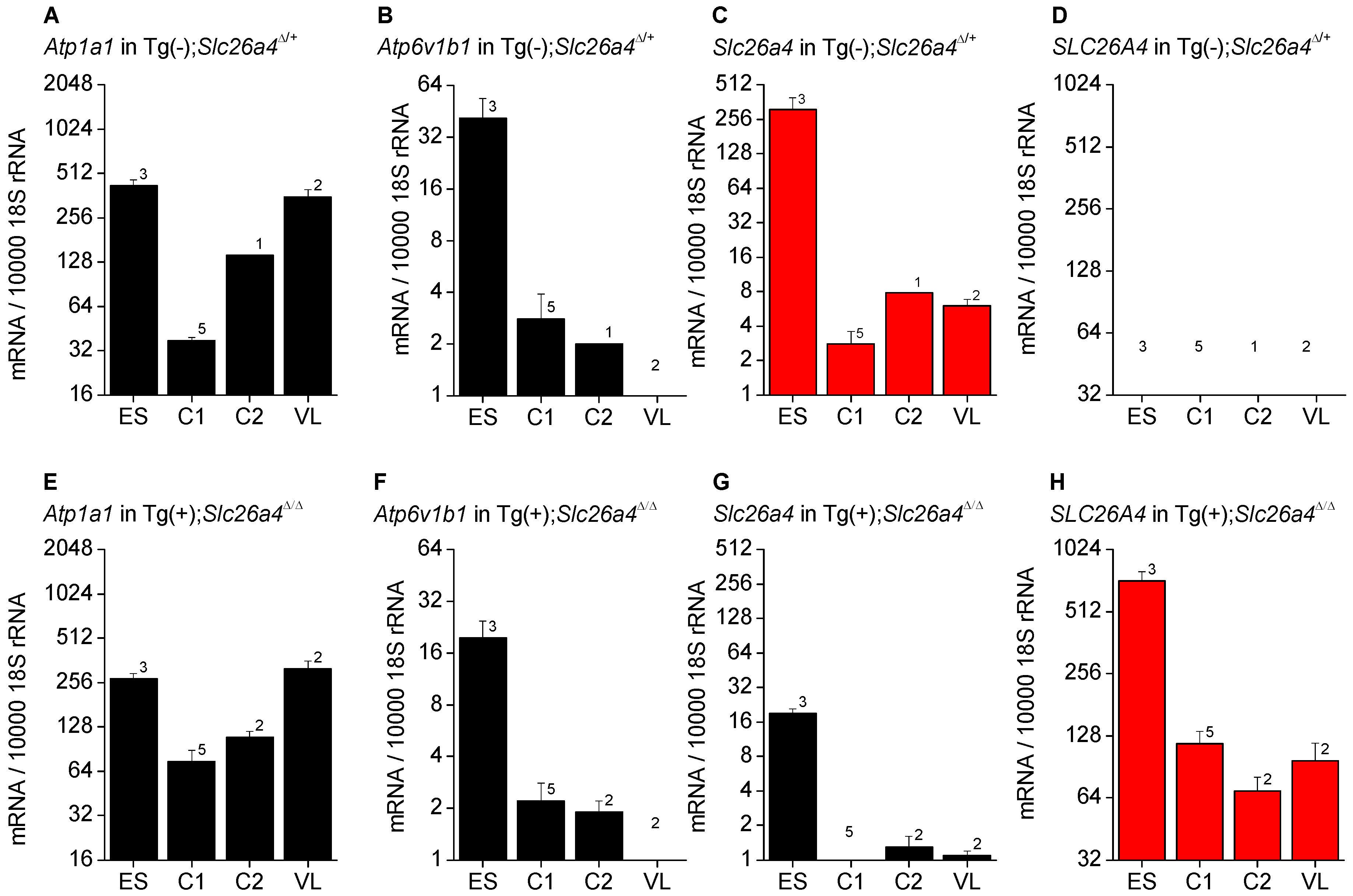<i>Atp1a1</i>, <i>Atp6v1b1</i>, <i>Slc26a4</i>, and <i>SLC26A4</i> mRNA levels in inner ear tissues.