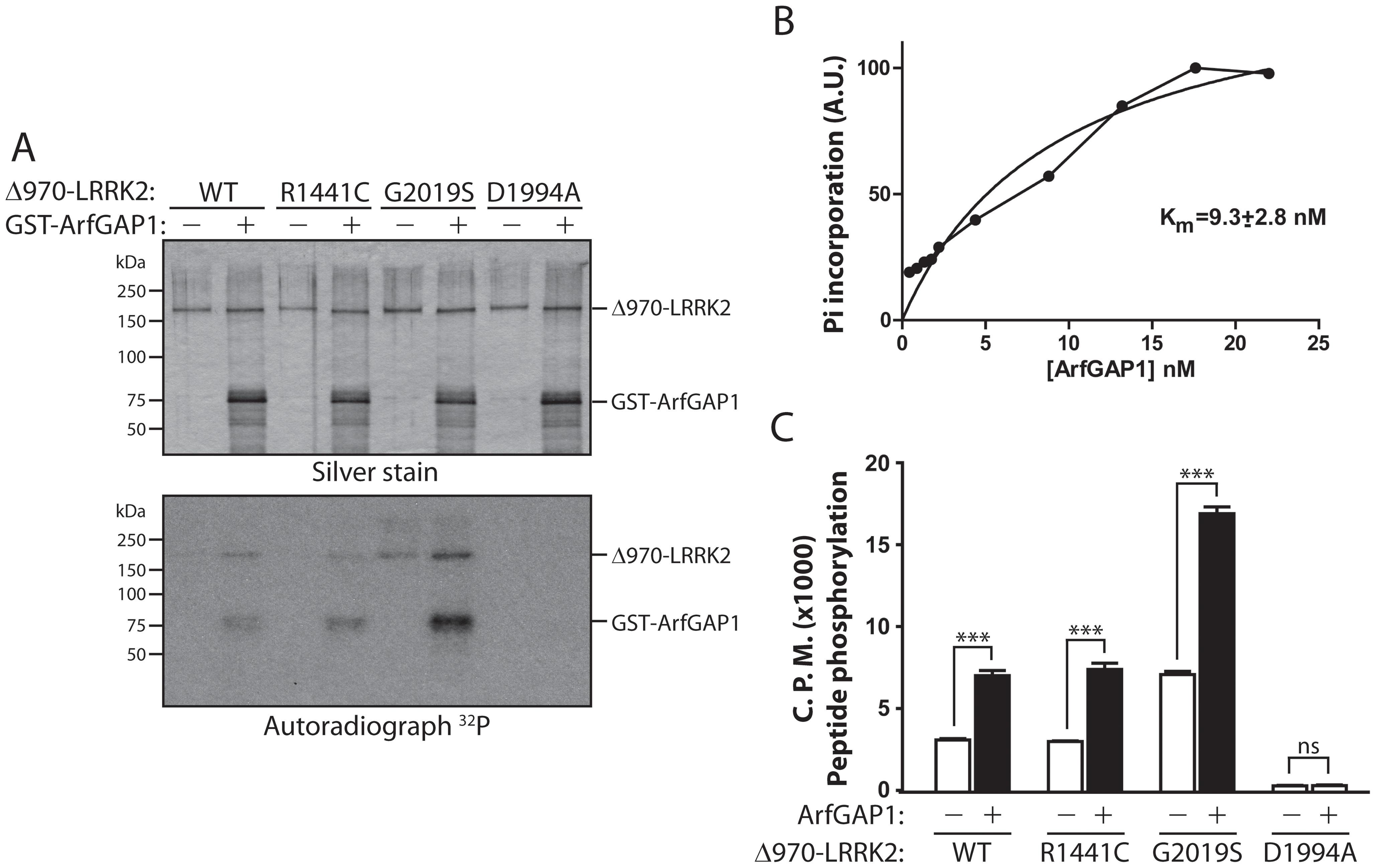 LRRK2 phosphorylates ArfGAP1, and ArfGAP1 enhances LRRK2 kinase activity.