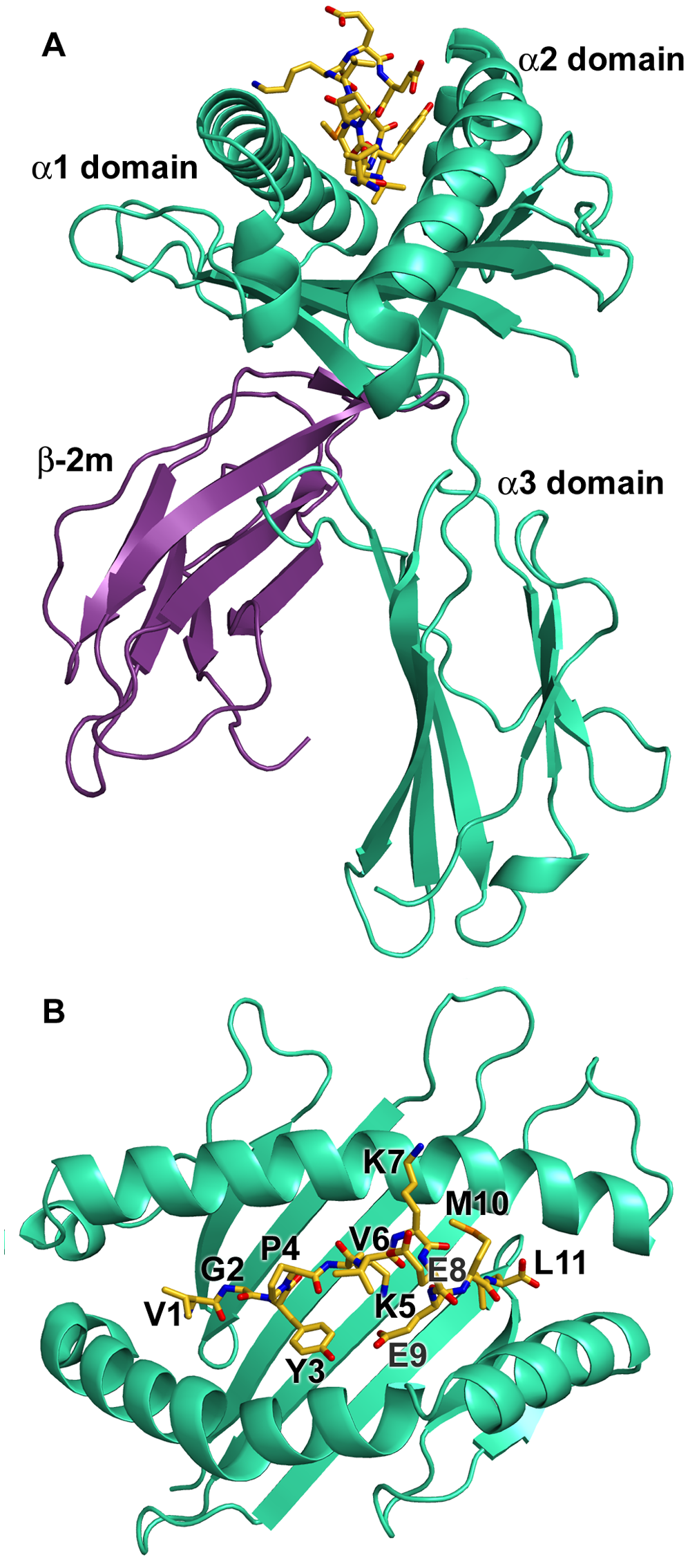 Overview of the structure of N*01301.