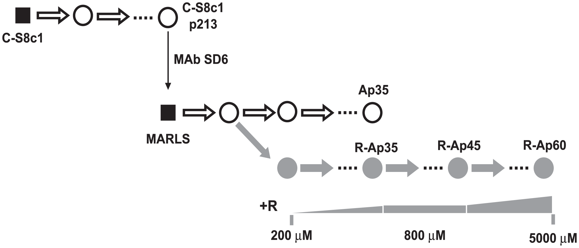 Passage history of FMDV in the presence of increasing cencentrations of ribavirin.