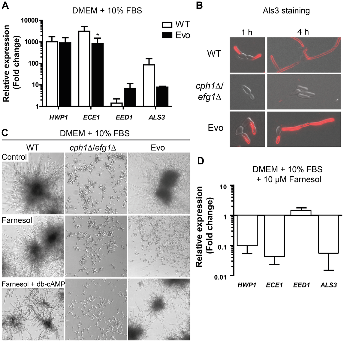 Analysis of hyphae-associated gene expression, Als3 surface expression and response to farnesol.