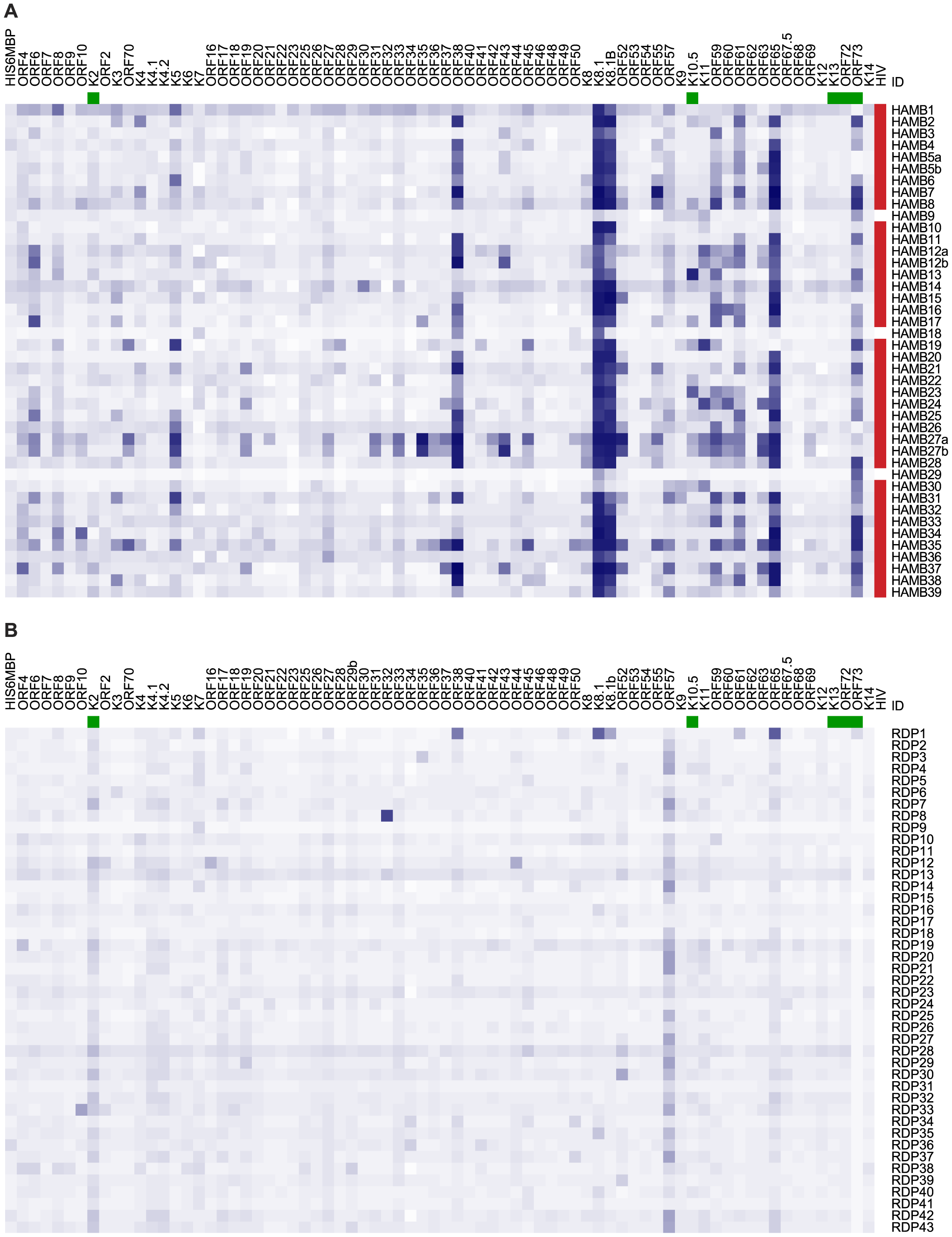 Heatmap showing seroreactivity of HAMB and RDP subjects to each antigen.