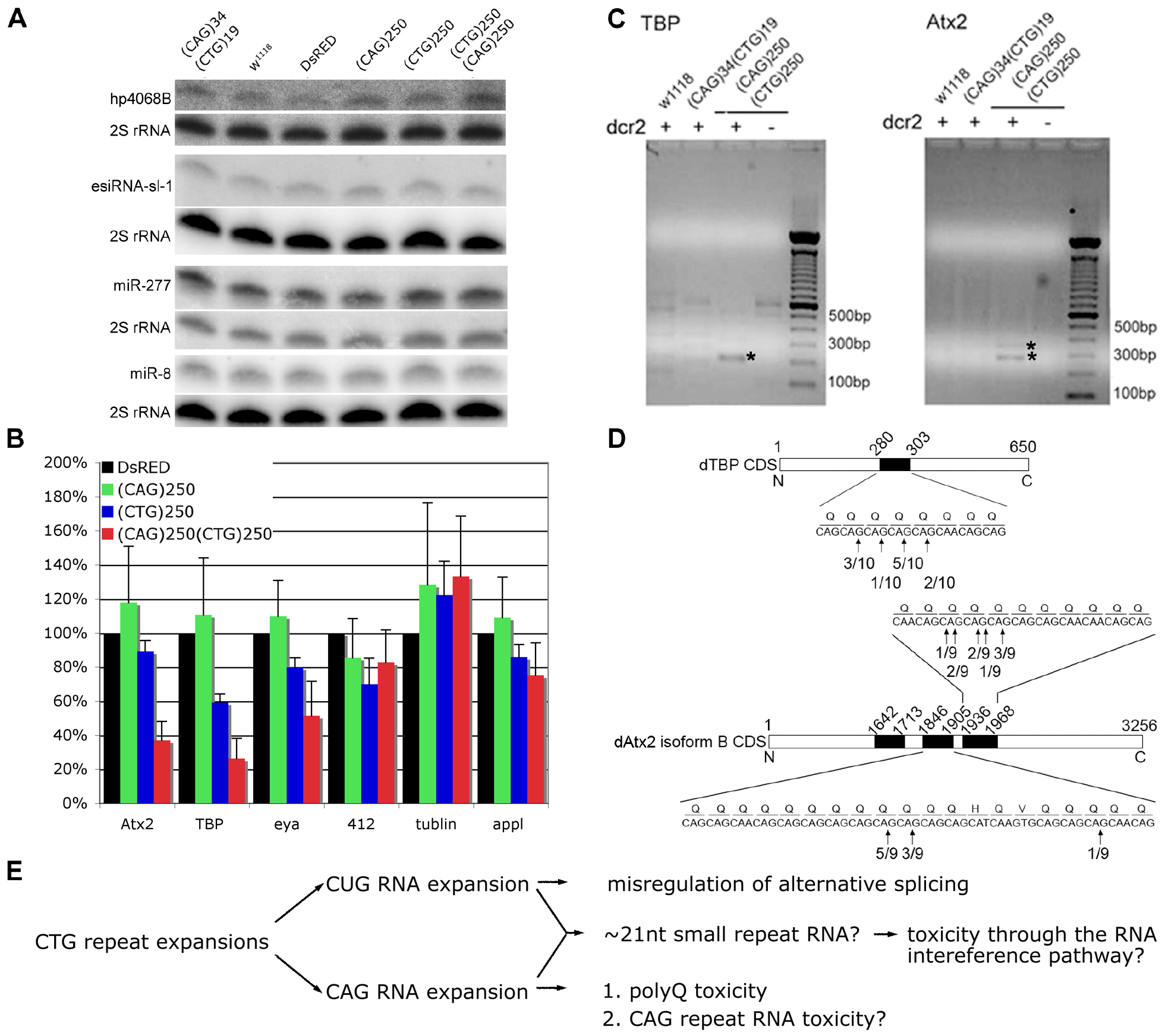 Expression of expanded (CAG) and (CTG) repeat transcripts disrupts expression of genes containing short triplet repeat stretches.