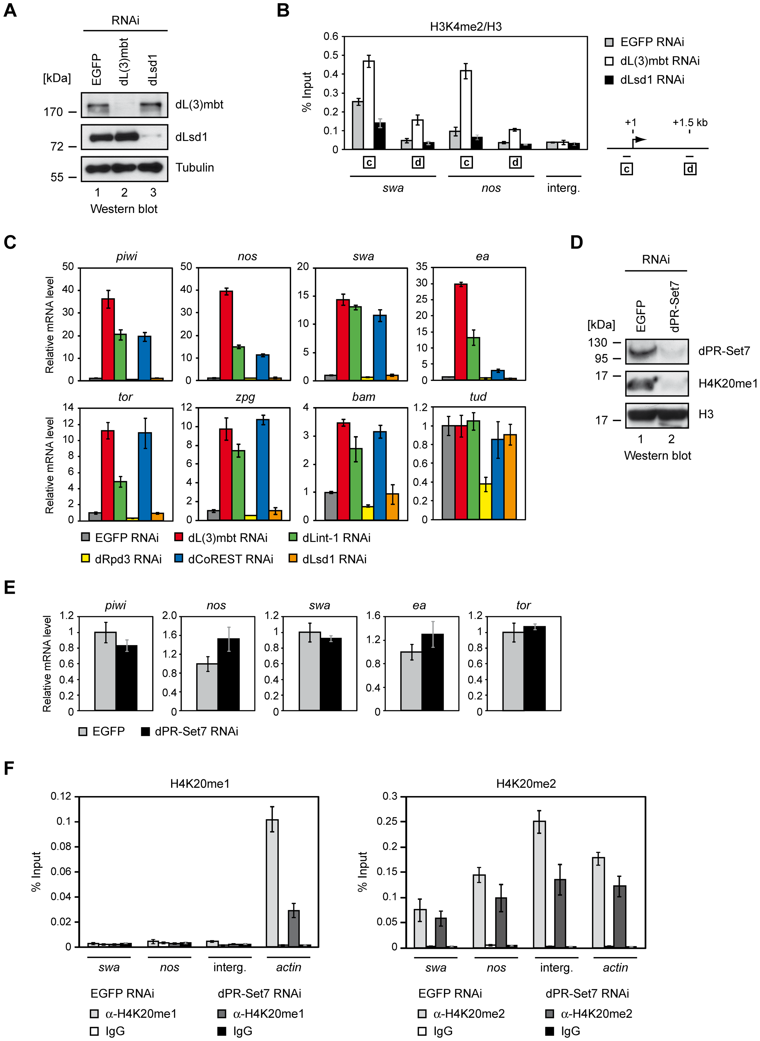 dLsd1, dRpd3, and dPR-Set7 are not essential for MBTS gene repression.