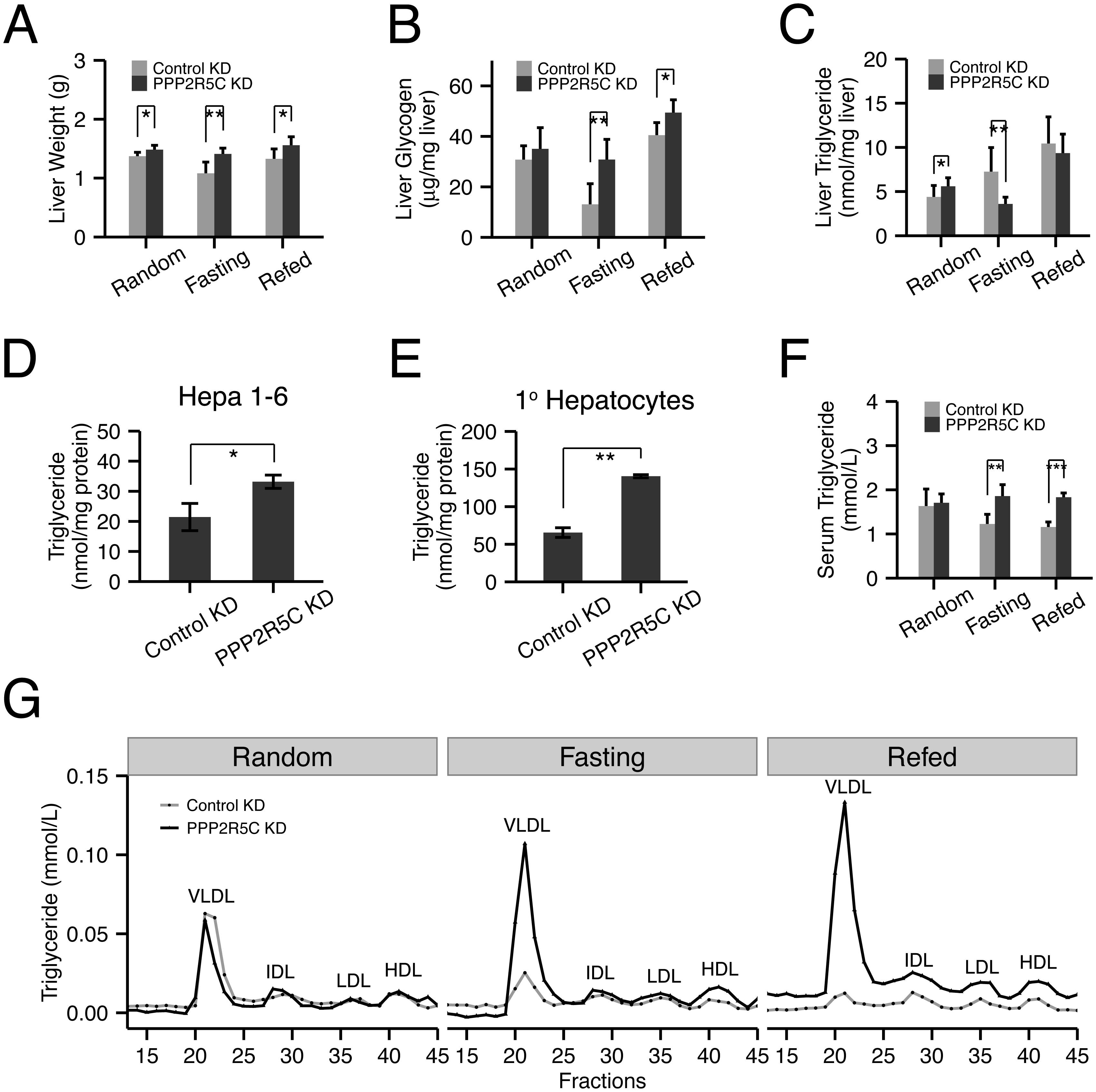 Hepatocyte-specific knockdown of PPP2R5C leads to increased lipogenesis and lipid secretion.