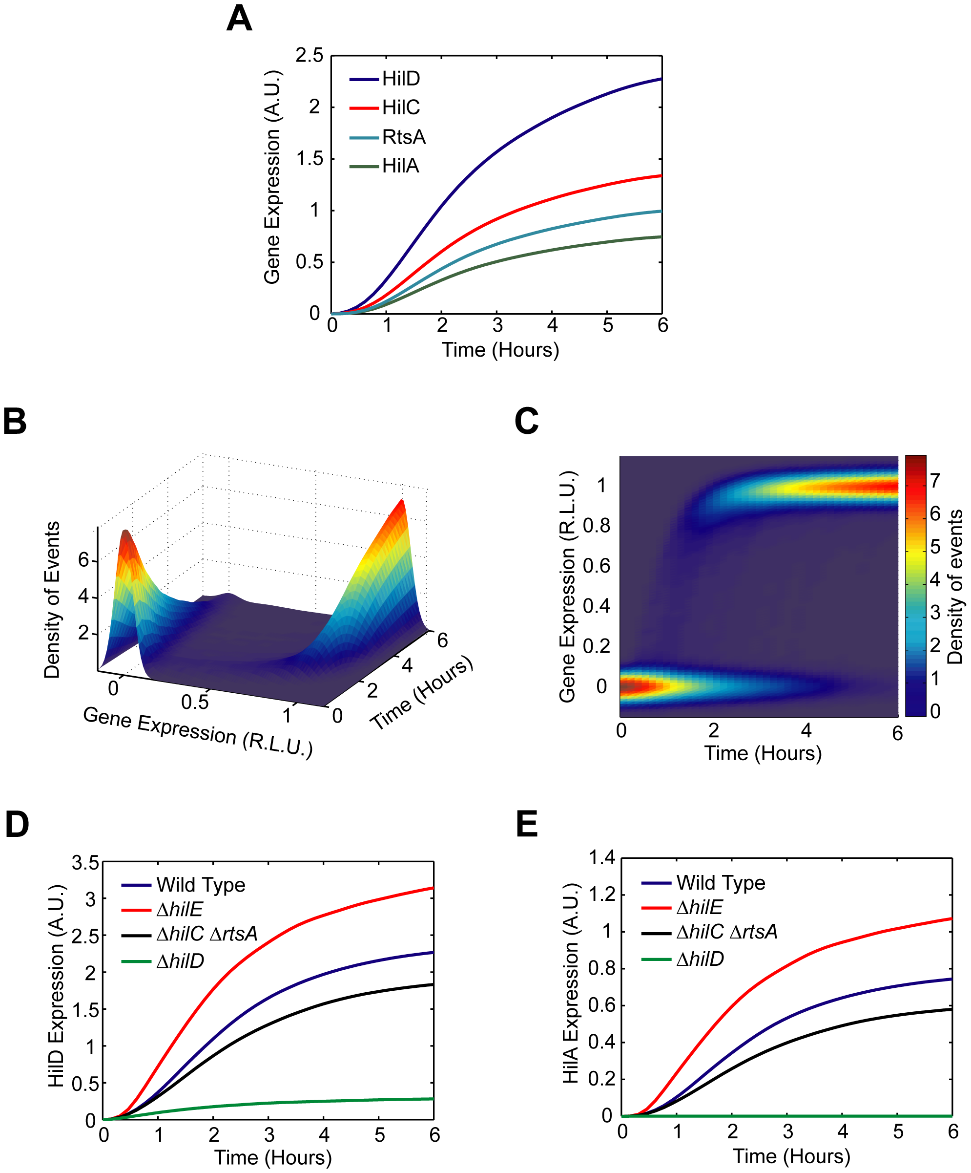Mathematical model is able to accurately capture SPI1 gene expression dynamics both for wild type and key mutants.