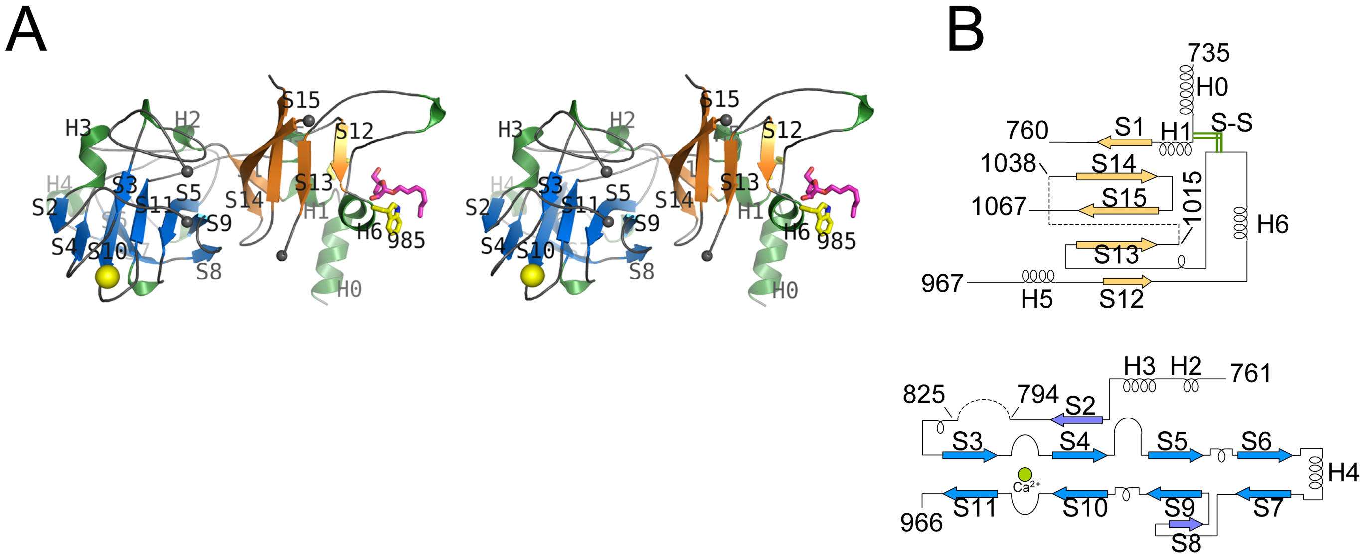 Stereo diagram of EmbC<sup>CT</sup> and topology of its subdomains.