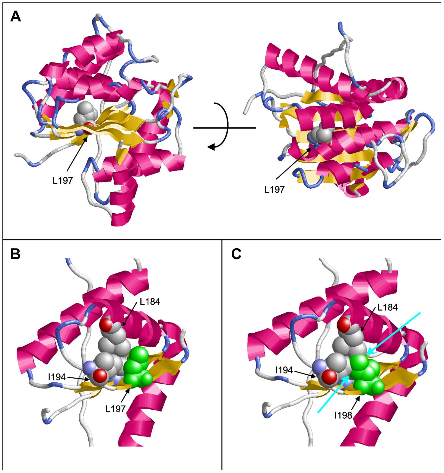 Molecular modeling of PGAP1.
