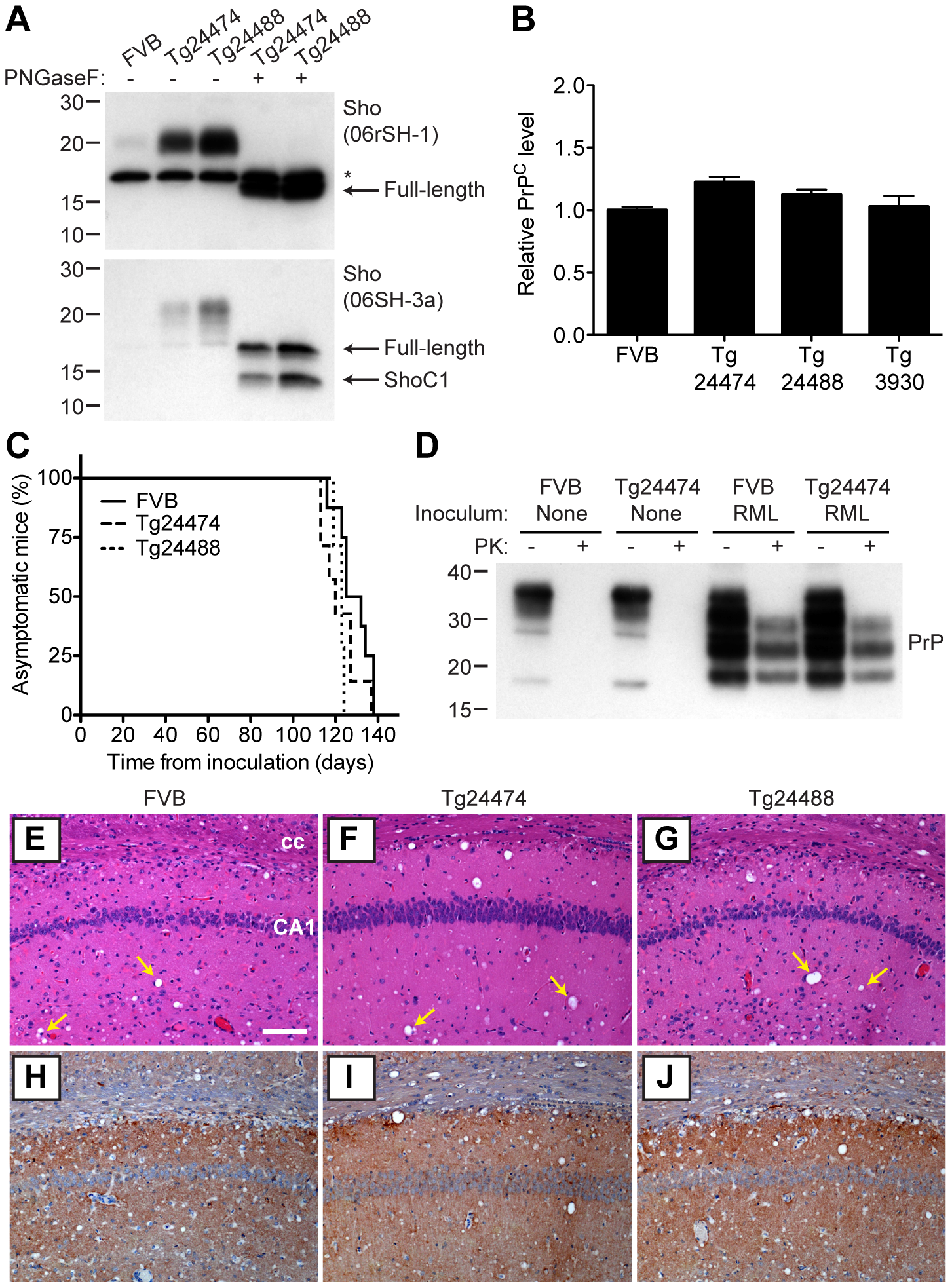 Prion infection of transgenic mice overexpressing Sho.