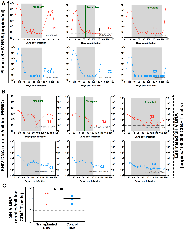 SHIV-RNA and -DNA levels post ART interruption.