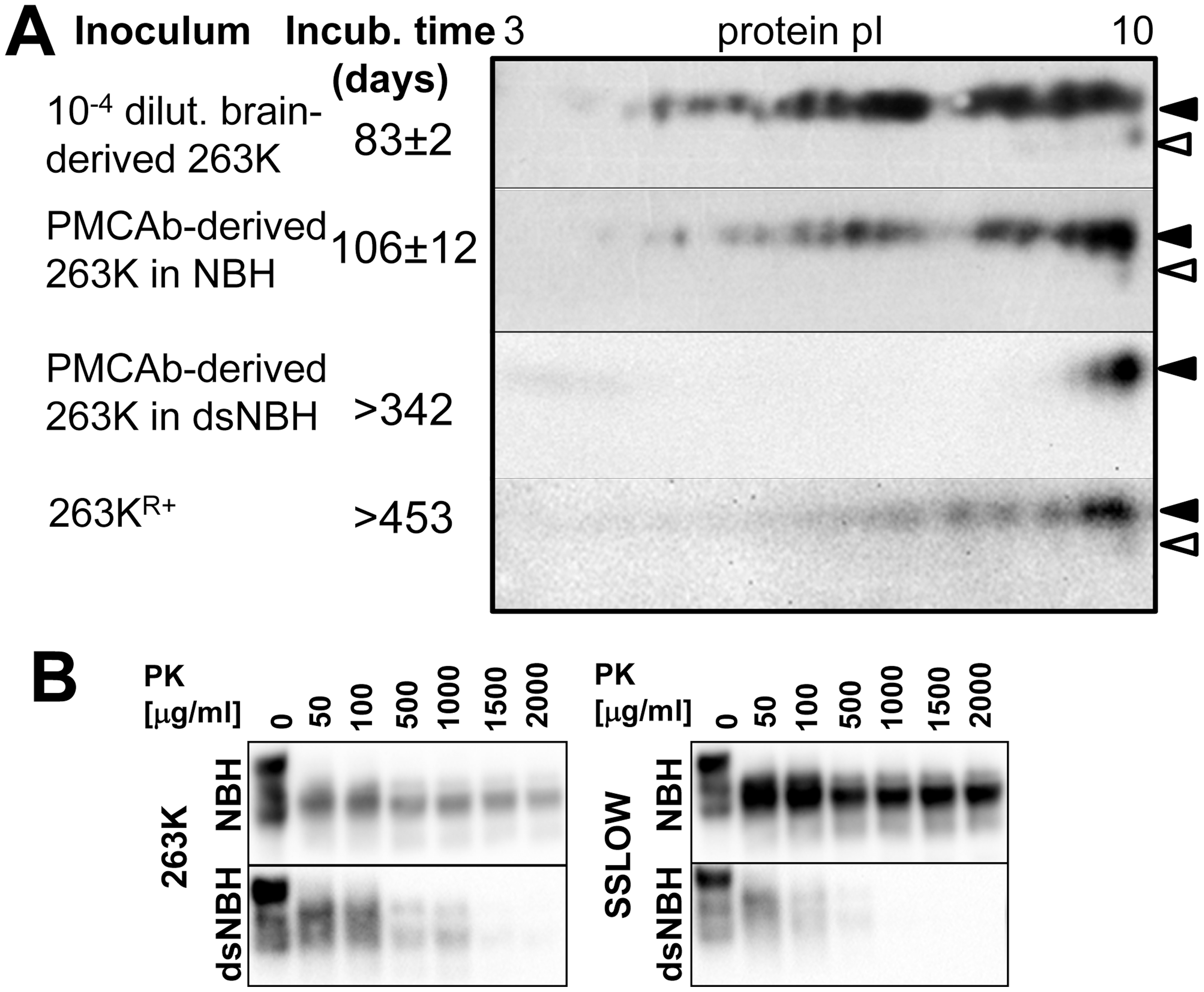 Correlation between PrP<sup>Sc</sup> sialylation status and its infectivity.