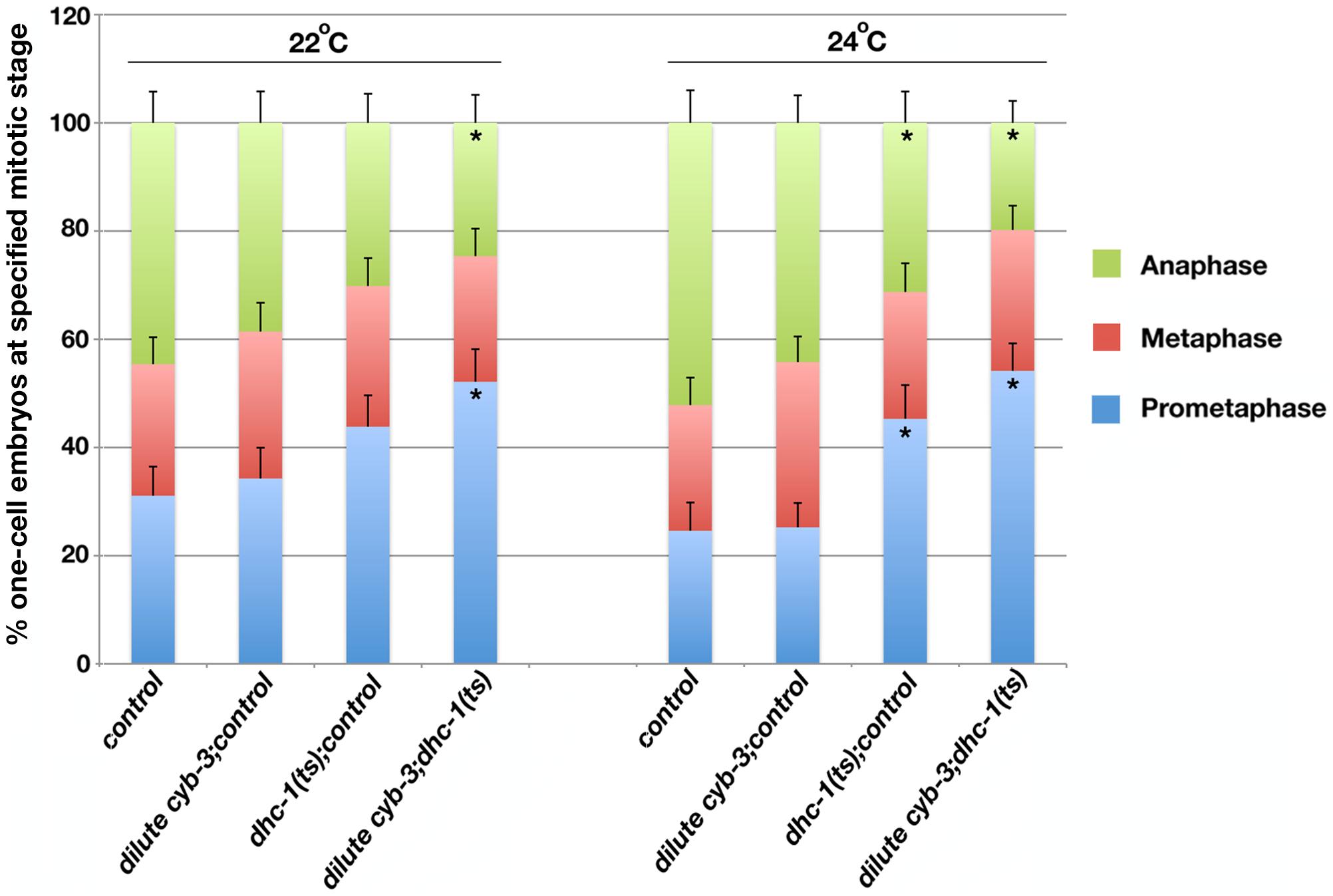 Inhibition of DHC-1 enhances cell cycle progression delays in <i>cyb-3(RNAi)</i> embryos.