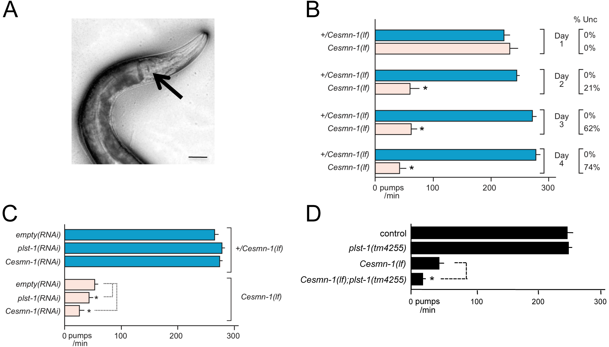 Loss of <i>C. elegans</i> PLS3 ortholog enhances the pharyngeal pumping defects of <i>Cesmn-1(lf)</i> animals.