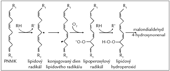 Poškození mastných kyselin působením volných radikálů (peroxidace lipidů). Proces lipoperoxidace začíná odejmutím vodíkového atomu z metylenové skupiny polynenasycené mastné kyseliny (PNMK; např. působením HO<sup>•</sup>) za vzniku lipidového radikálu. Následně dochází k přesunu vazeb a vzniku konjugovaného dienu, který snadno reaguje s molekulárním kyslíkem za vzniku lipoperoxylového radikálu. Ten může reagovat s další PNMK za vzniku dienů, hydroperoxidů a peroxidů, které jsou dále štěpeny za vzniku reaktivních strukturně rozmanitých derivátů uhlovodíků, např. alkanalů (malondialdehydu), alkenolů a jejich hydroxyderivátů (4-hydroxynonenalu).