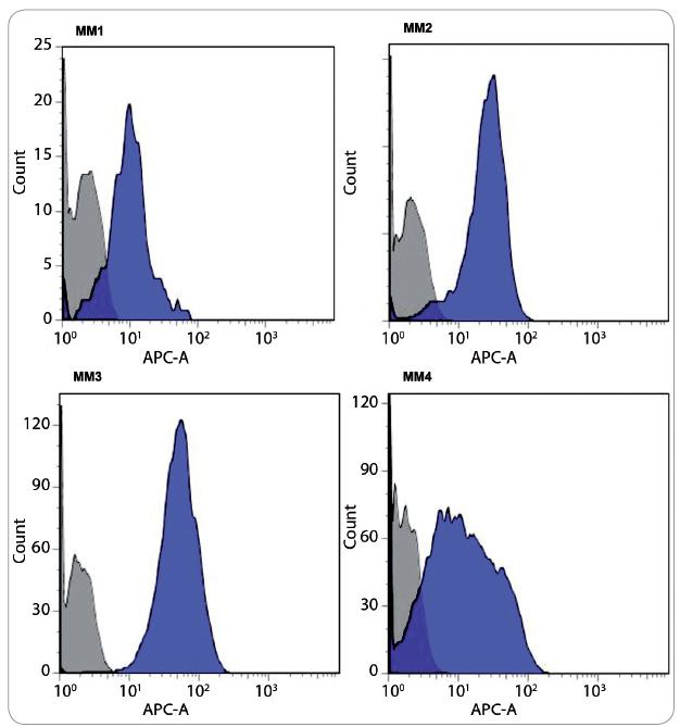 Fig. 1. Heterogeneous nestin levels in CD138+38+ PC of MM patients. Representative results demonstrate diff erent shifts of fl uorescent intensity of entire PC population compared to isotypic control. Equivalent amounts of isotype control mouse IgG1-APC (tinted gray histograms) were assessed in parallel with anti-human nestin-APC (solid blue histograms).