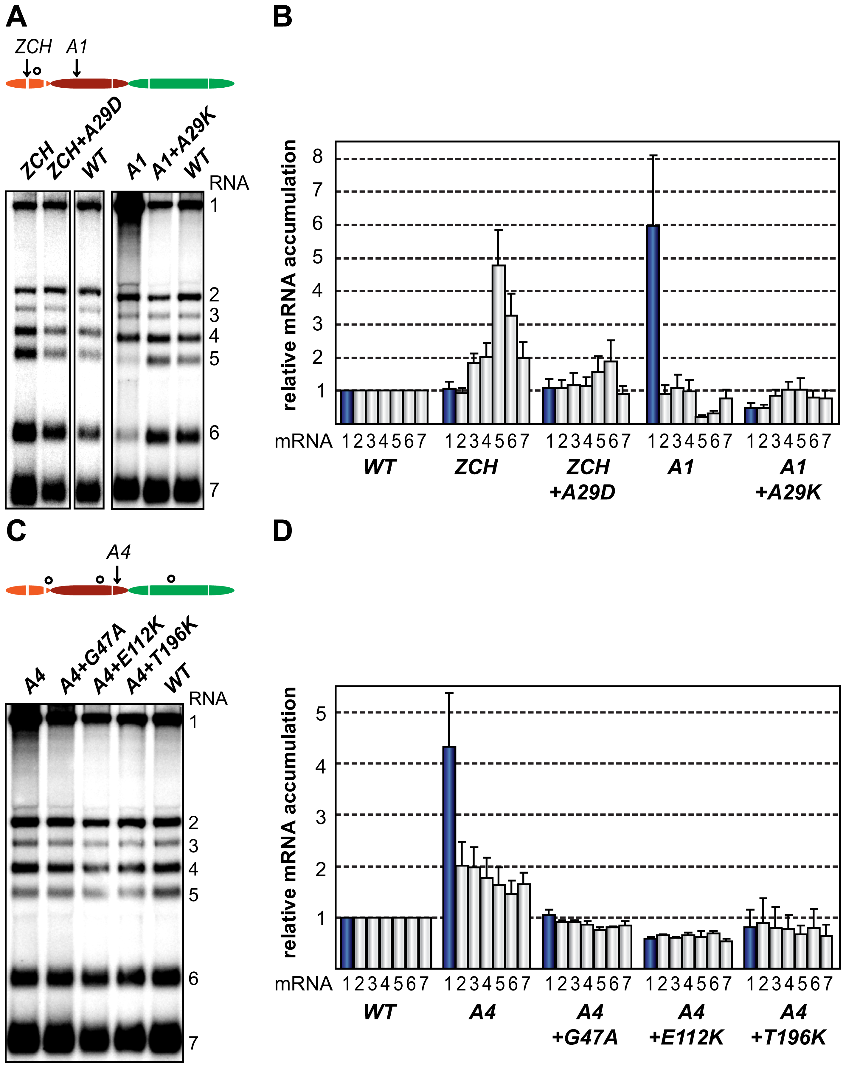 Second-site mutations in nsp1 moderate species-specific defects in mRNA accumulation.