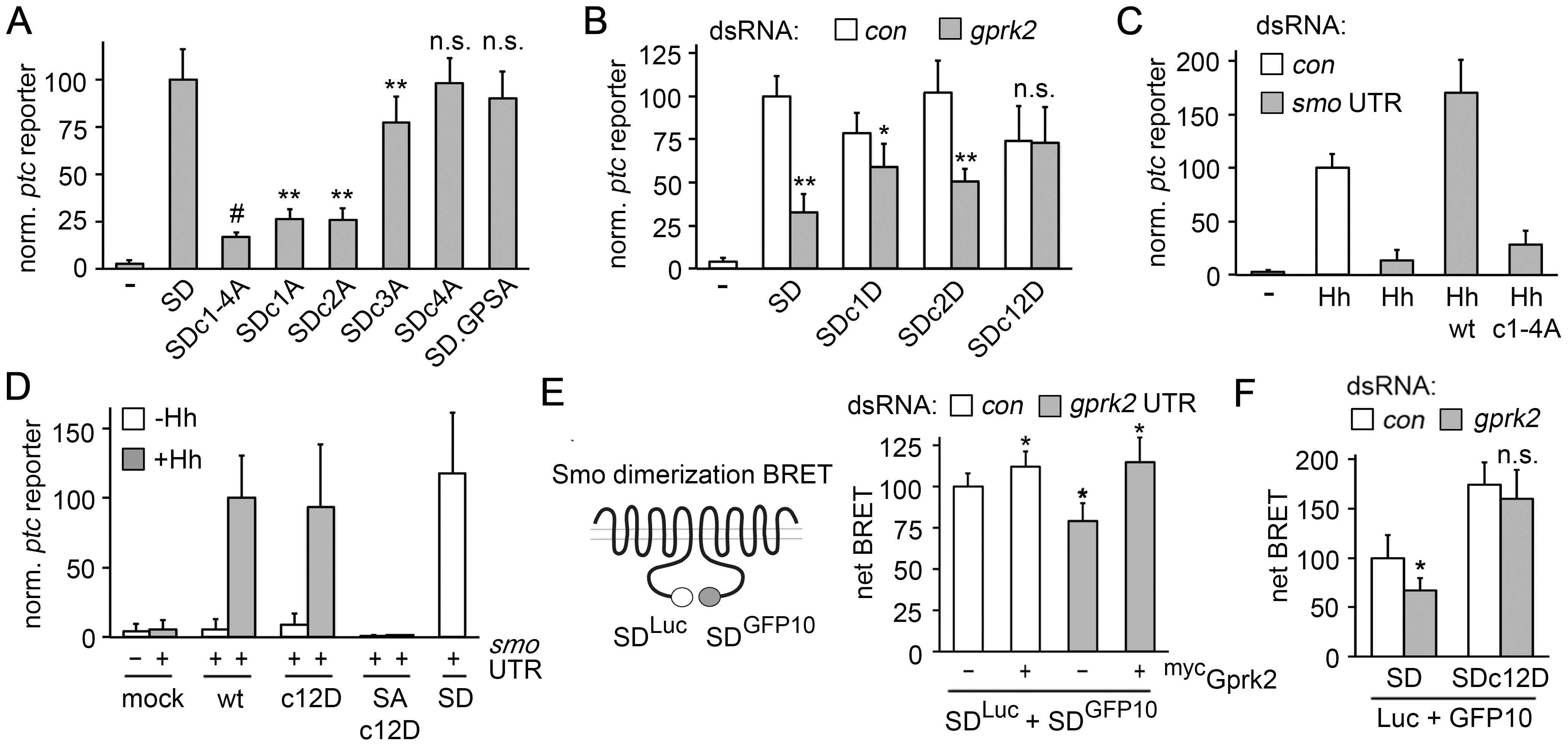 Gprk2 promotes Smo dimerization and activity.