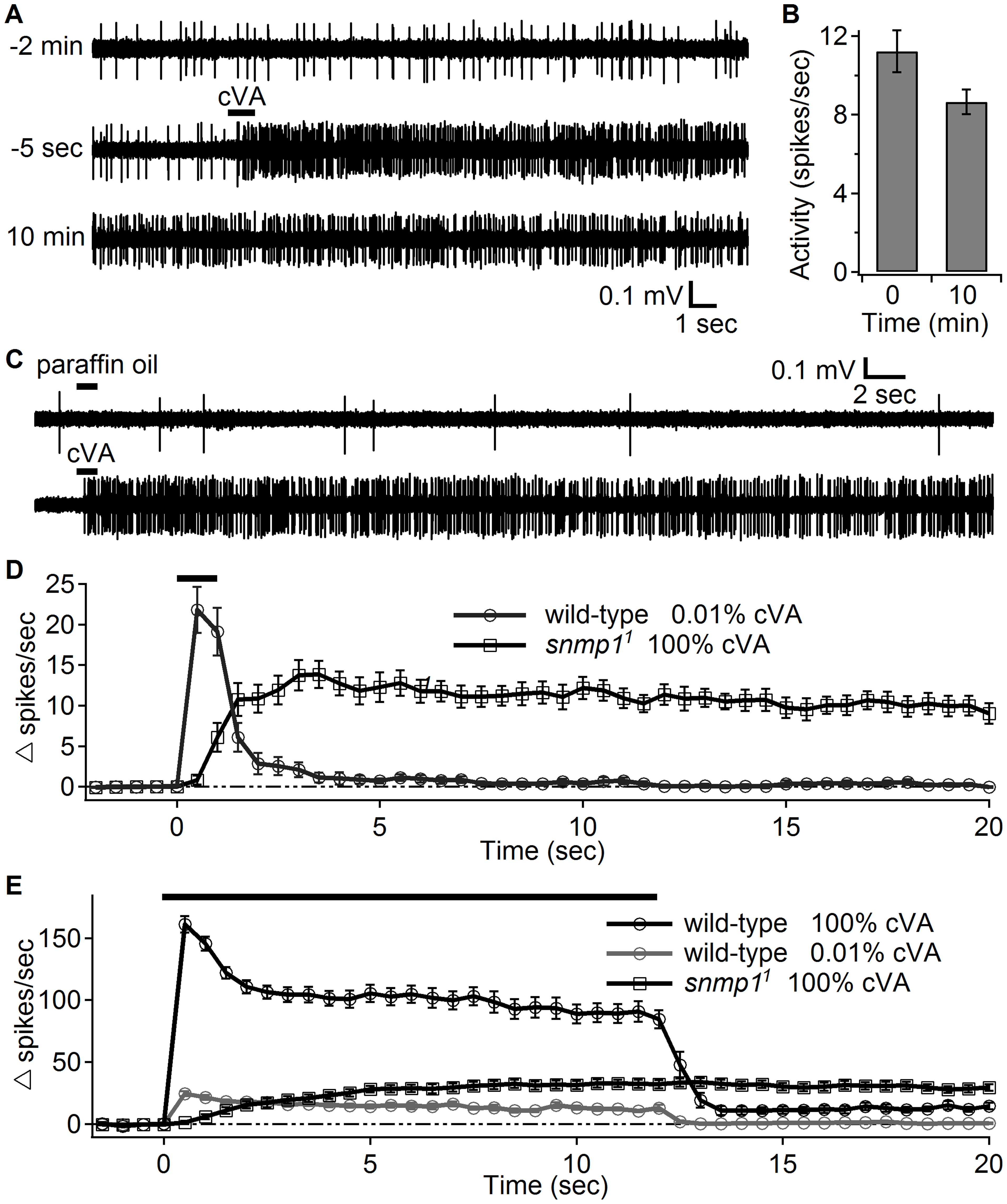 OR67d ORNs in <i>snmp1<sup>1</sup></i> females showed high neuronal activity long after transient stimulation with cVA.