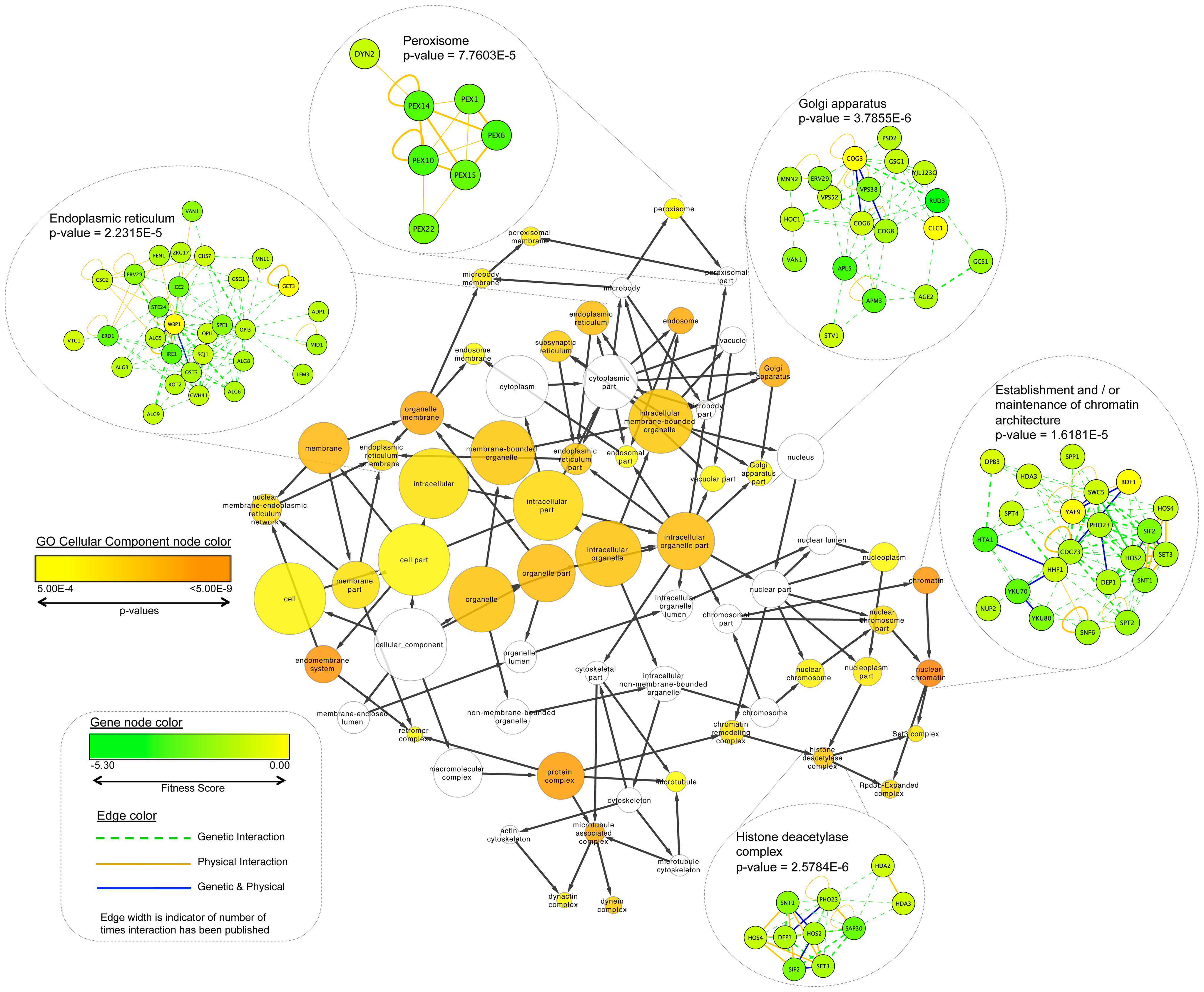 Fitness data for all significantly affected sensitive strains identified from this study were mapped onto the <i>S. cerevisiae</i> BioGRID interaction dataset using Cytoscape.