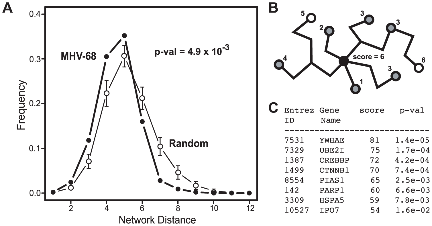 Network context of cellular proteins that interacted with MHV-68 proteins.