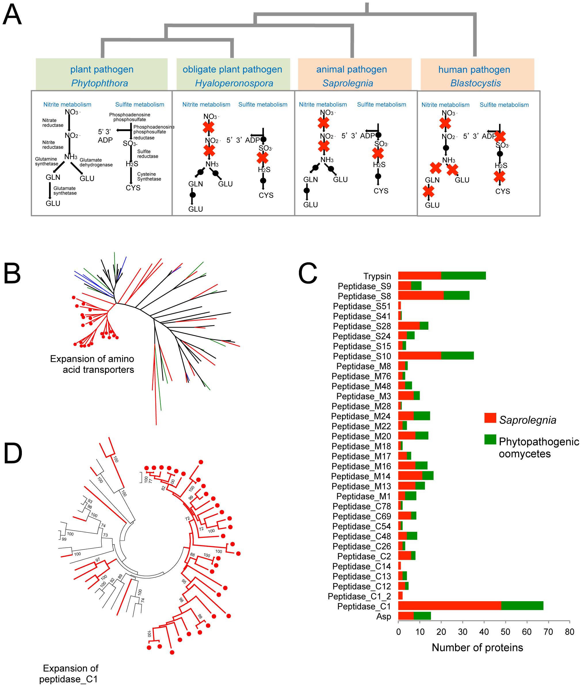 Metabolic adaptations to animal pathogenesis.