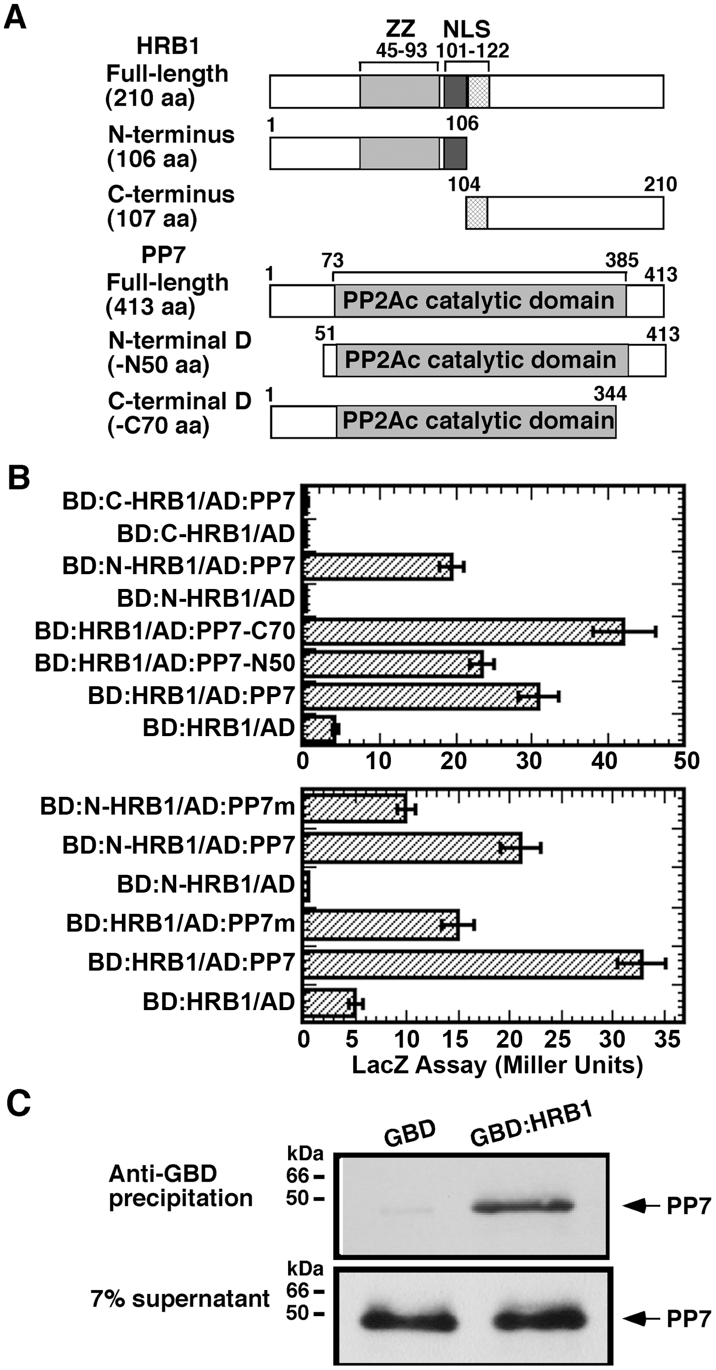 HRB1 interacts with PP7 <i>in vitro</i>.