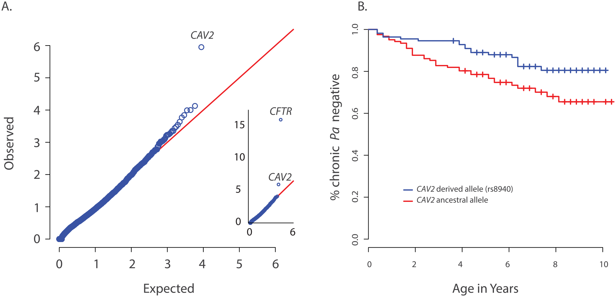 Primary results for <i>CAV2</i> from exome discovery and validation phases.