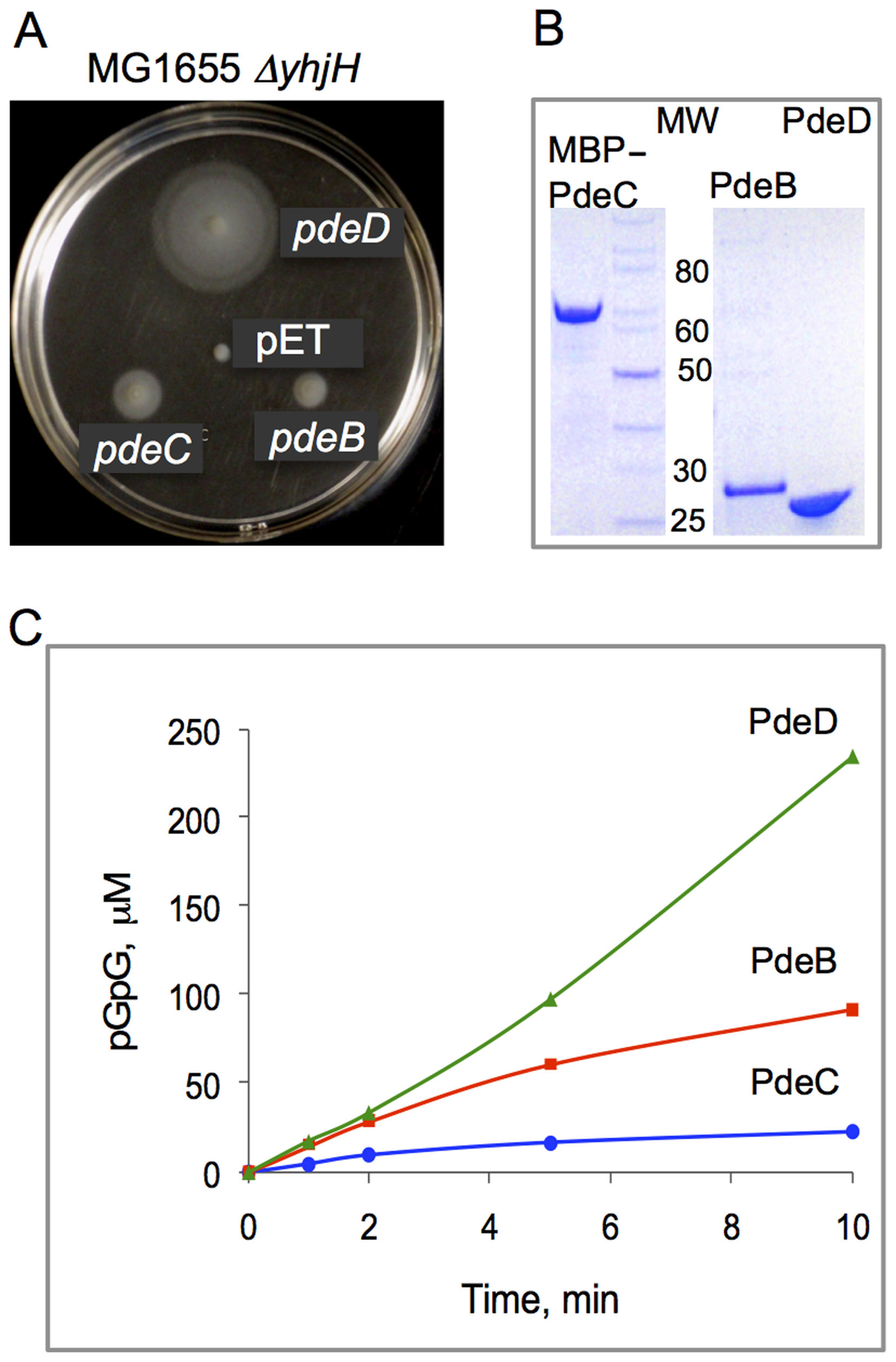 PDE activities of the <i>L. monocytogenes</i> proteins PdeB-D.