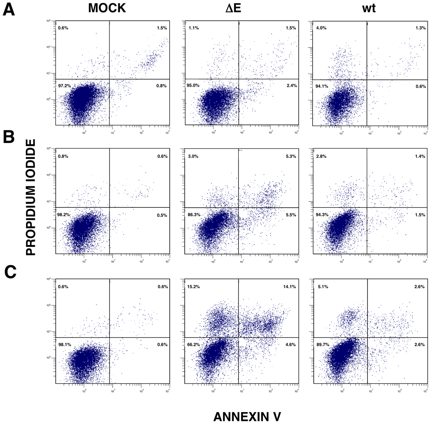 rSARS-CoV-ΔE-induced apoptosis.