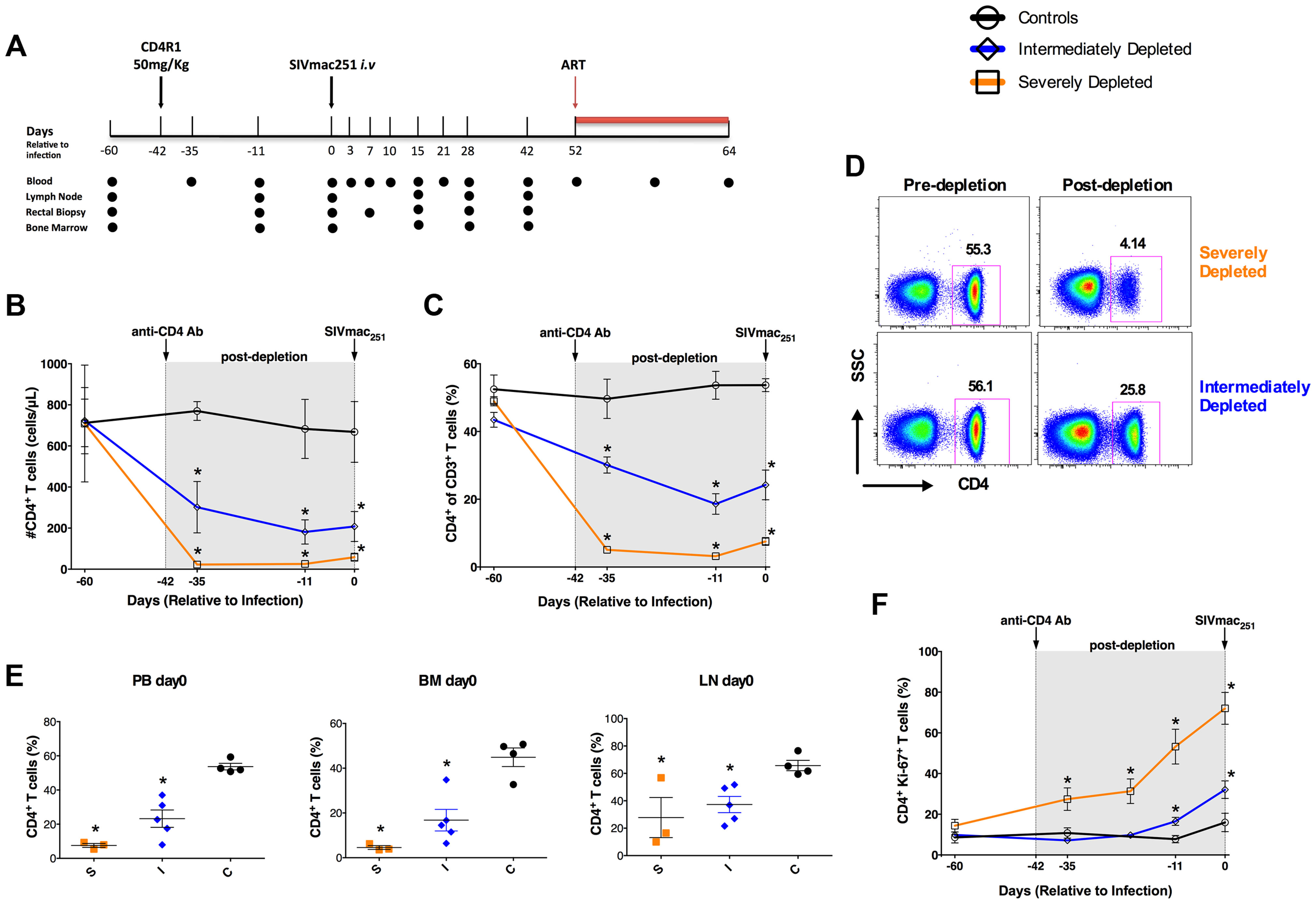 Study design and extent of CD4<sup>+</sup> T-cell depletion induced by CD4R1.