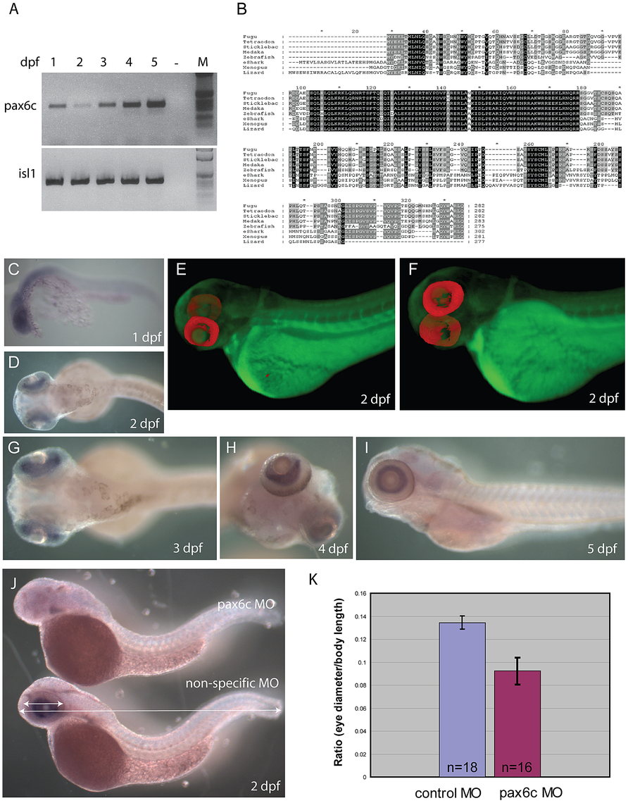 Characterization of zebrafish <i>Pax6.2a</i>.