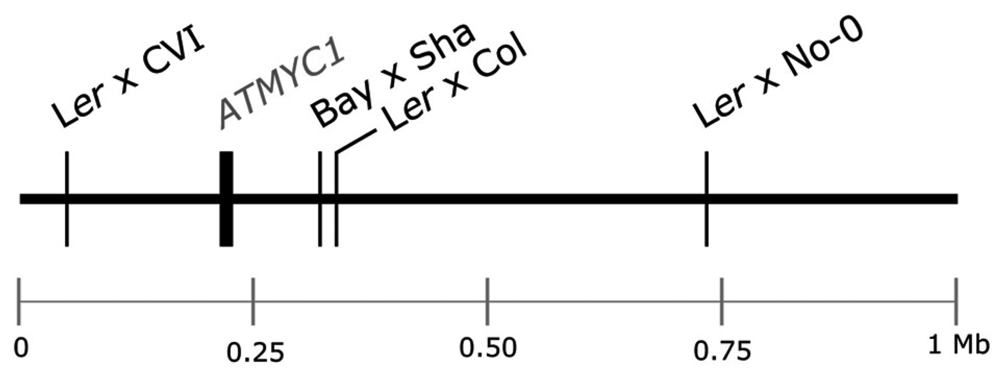 Schematic of the top 1 Mb of the physical map of chromosome four of <i>A. thaliana</i>.