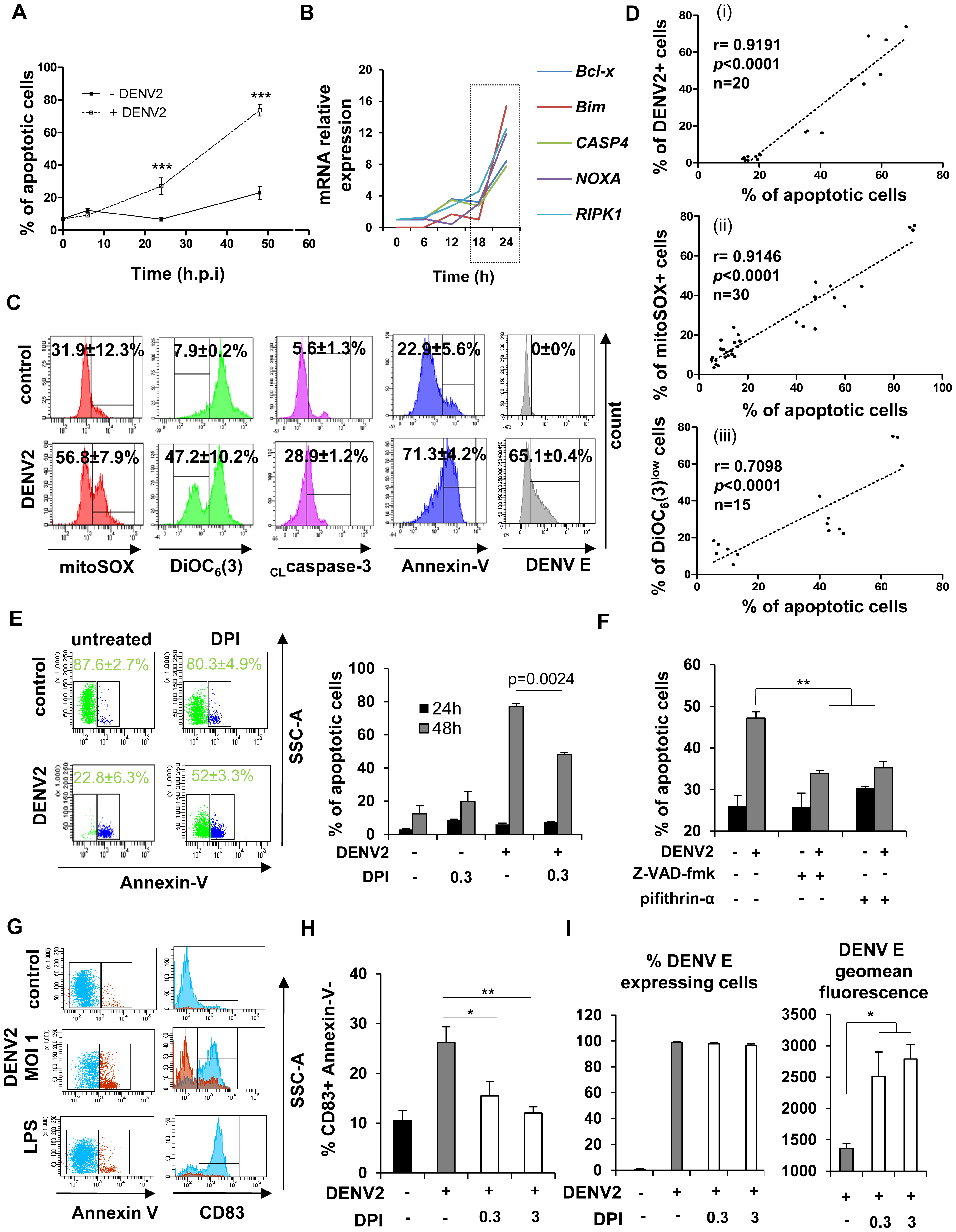 NOX-dependent ROS production triggers mitochondrial-dependent apoptosis in DENV-infected cells and activates bystander cells.