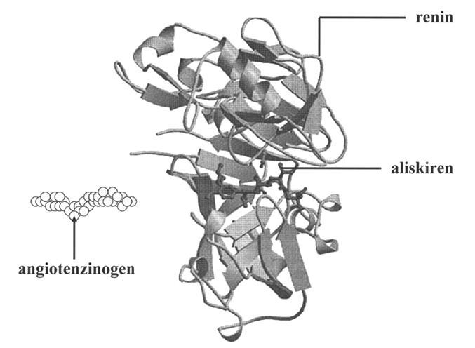 Stužkový model reninu s enzymatickou štěrbinou, kde se váže aliskiren (dle 38)